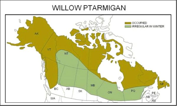 Willow Ptarmigan Range.