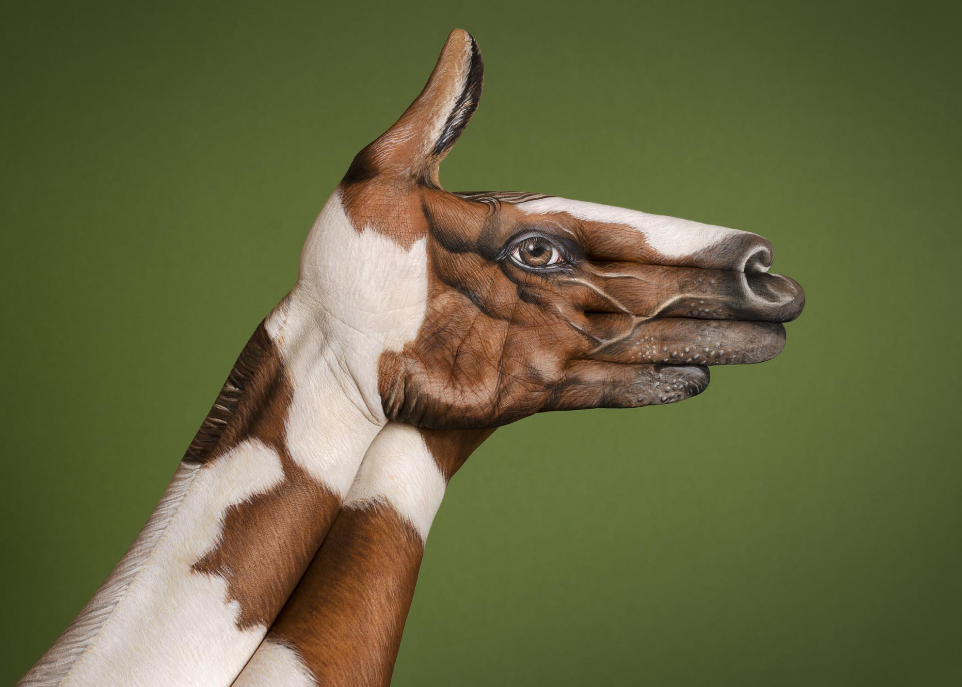 Horse-Dappled-web.jpg