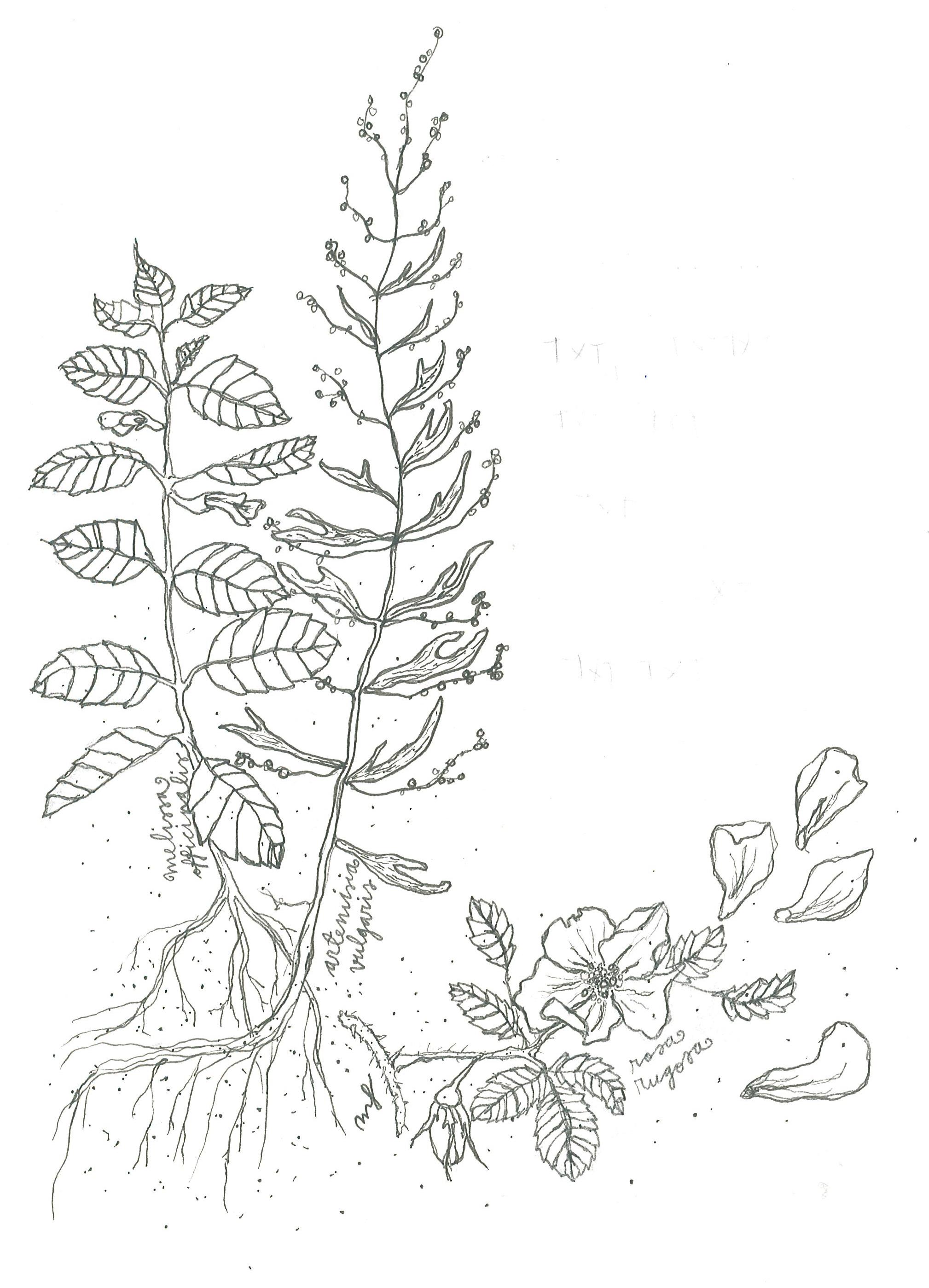 kasvit.jpg
