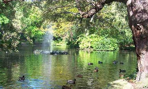Arboretum Park