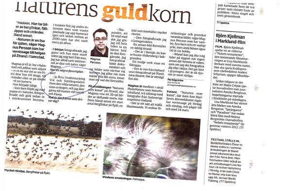 Hallandsposten, februari 2011