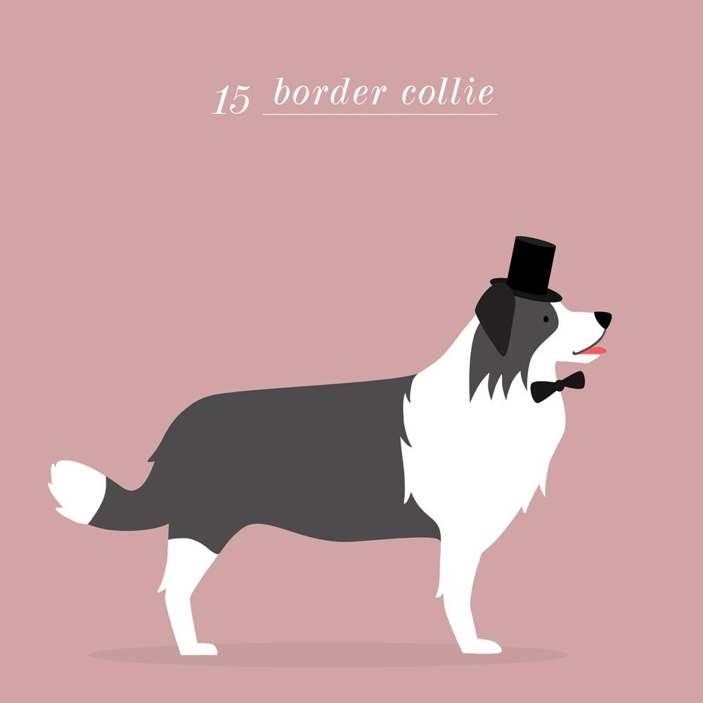 Charlene Girodet-Border Collie