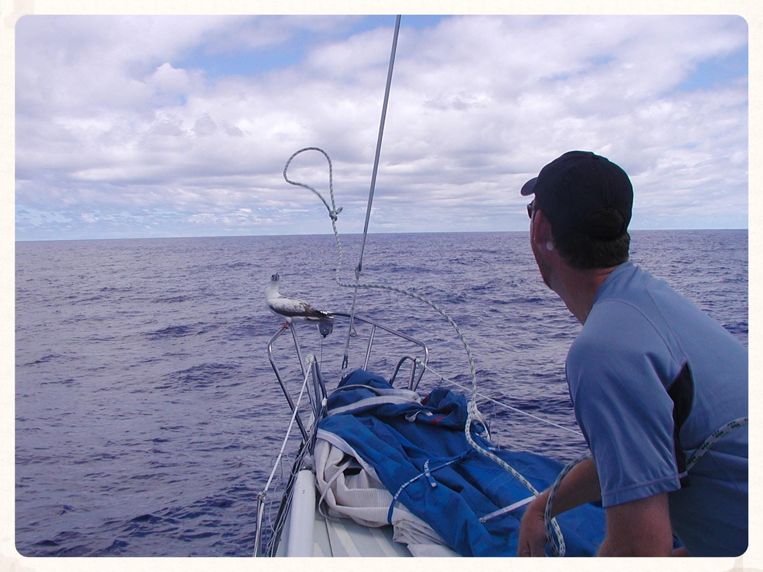 Me attempting to catch a bird - North Pacific Ocean