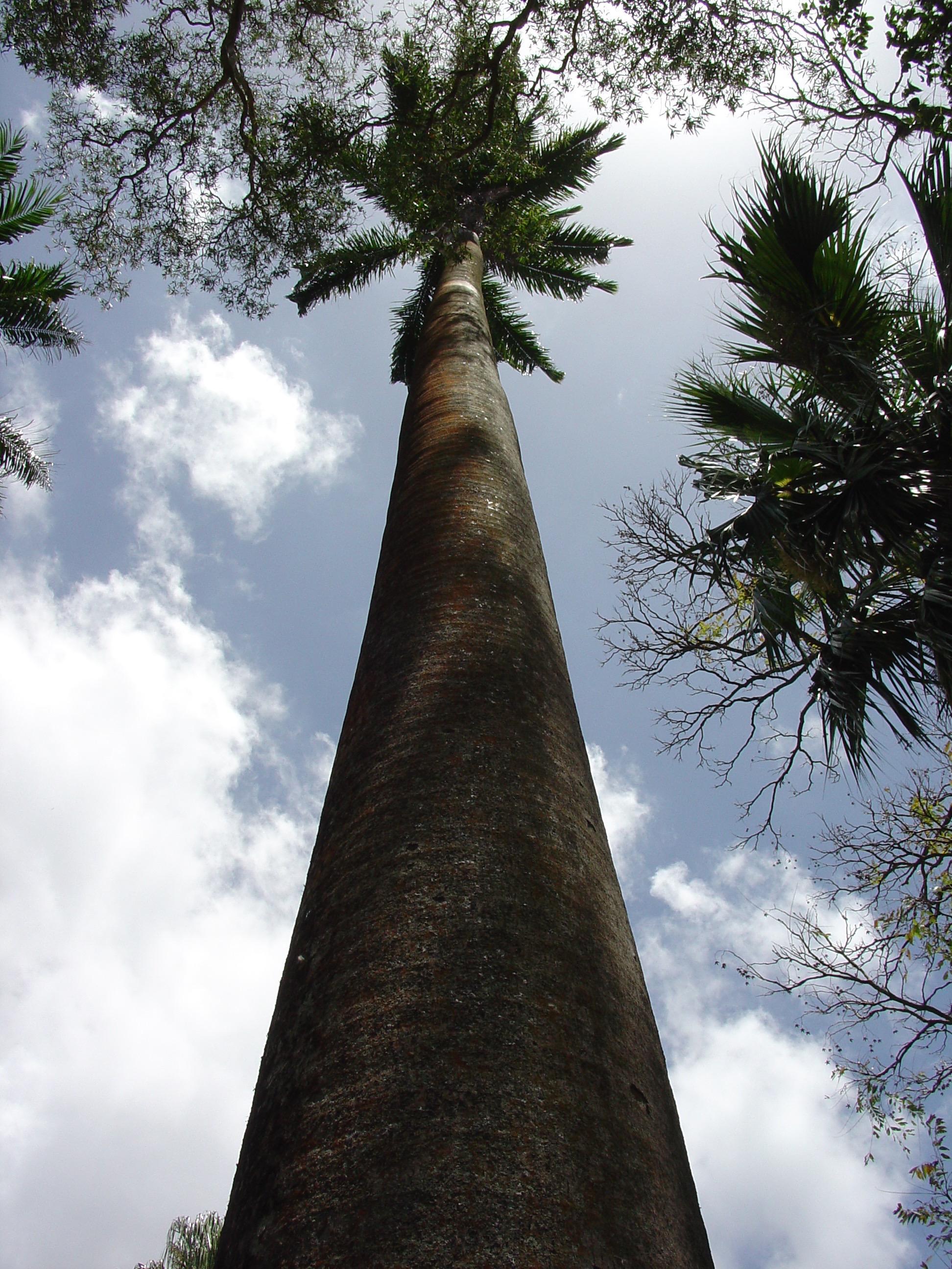 By Garth Woodruff - St. Vincent - First Botanical Garden in the Western Hemisphere.