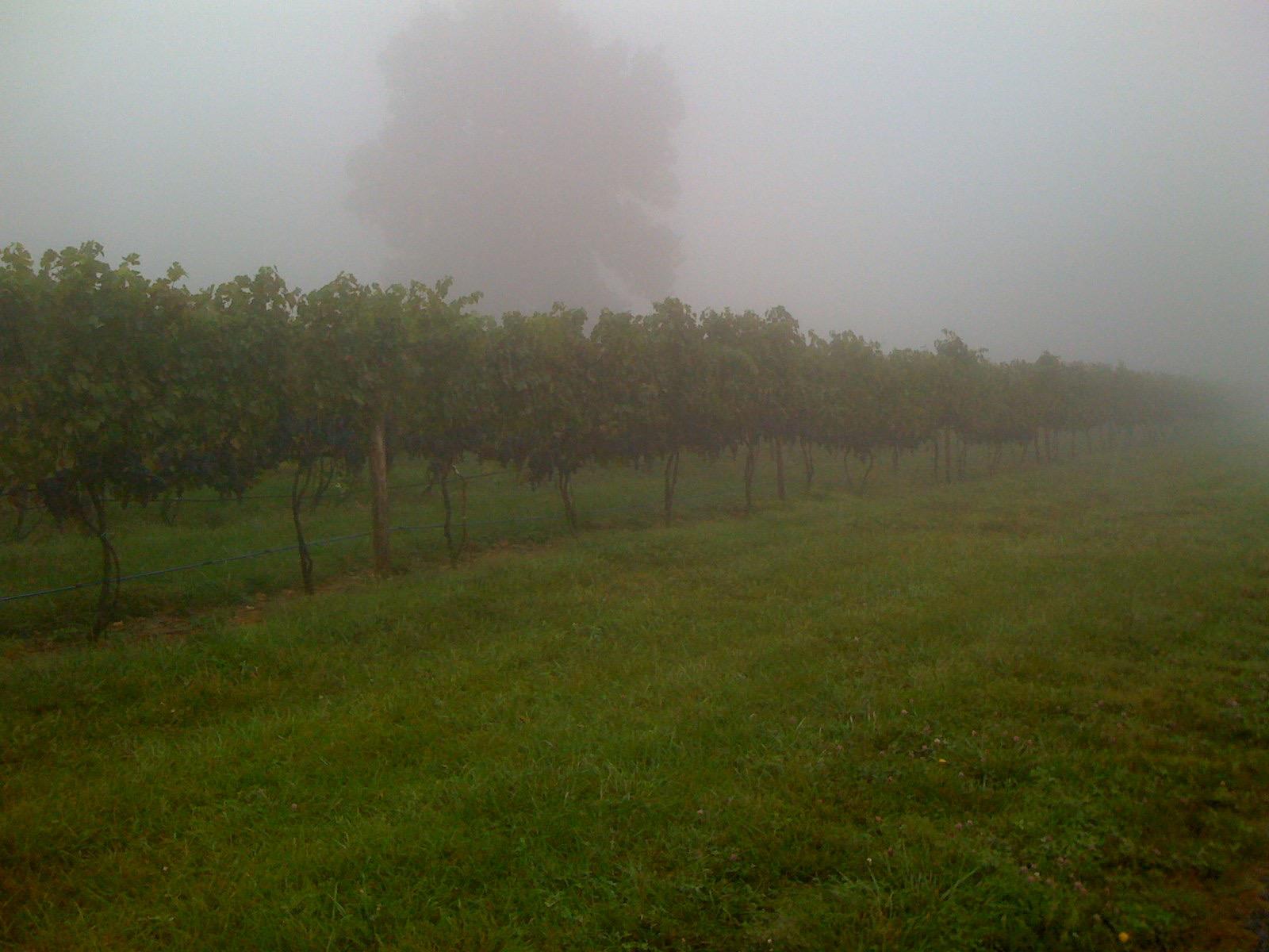 By Garth Woodruff - Linden, VA. Fox Meadow Winery.
