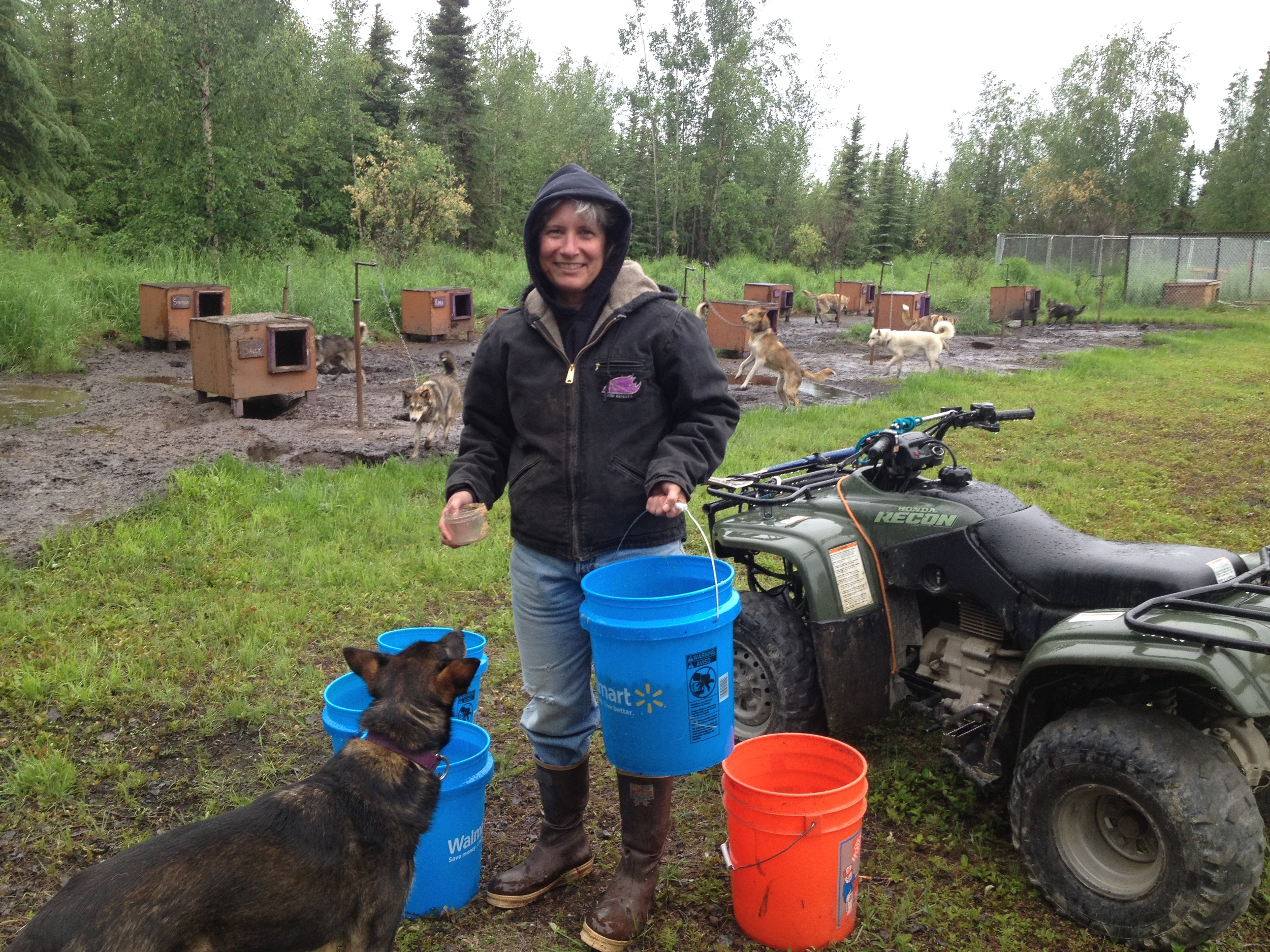 Katy braving the pouring rain to serve dinner to the sled dogs.