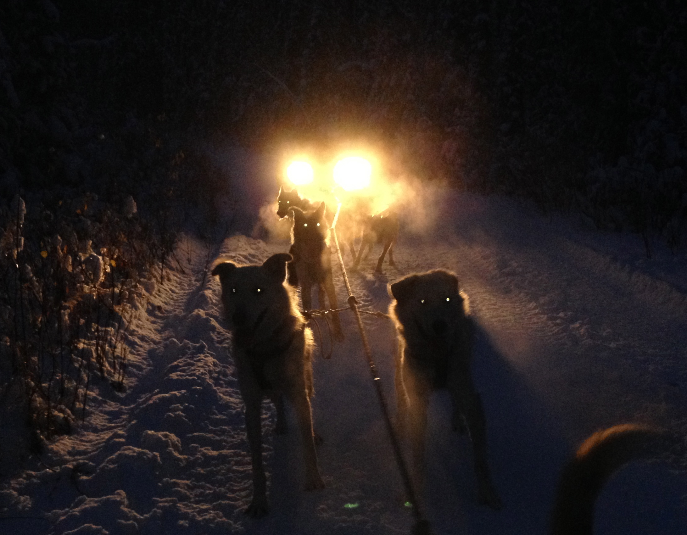 Lefty and Fenton illuminated by the lights of the ATV.