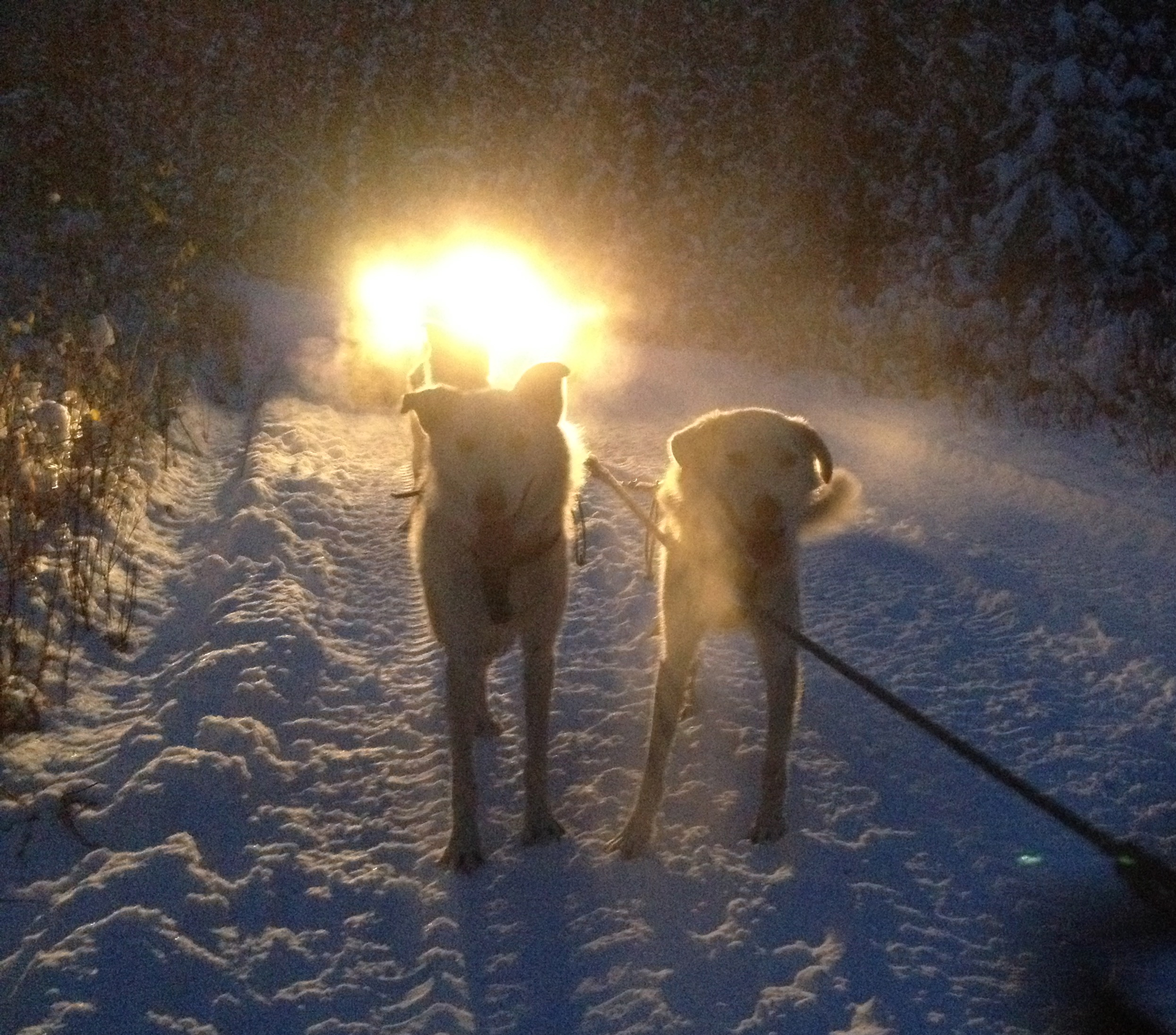 Lefty and Fenton illuminated by the lights of the ATV