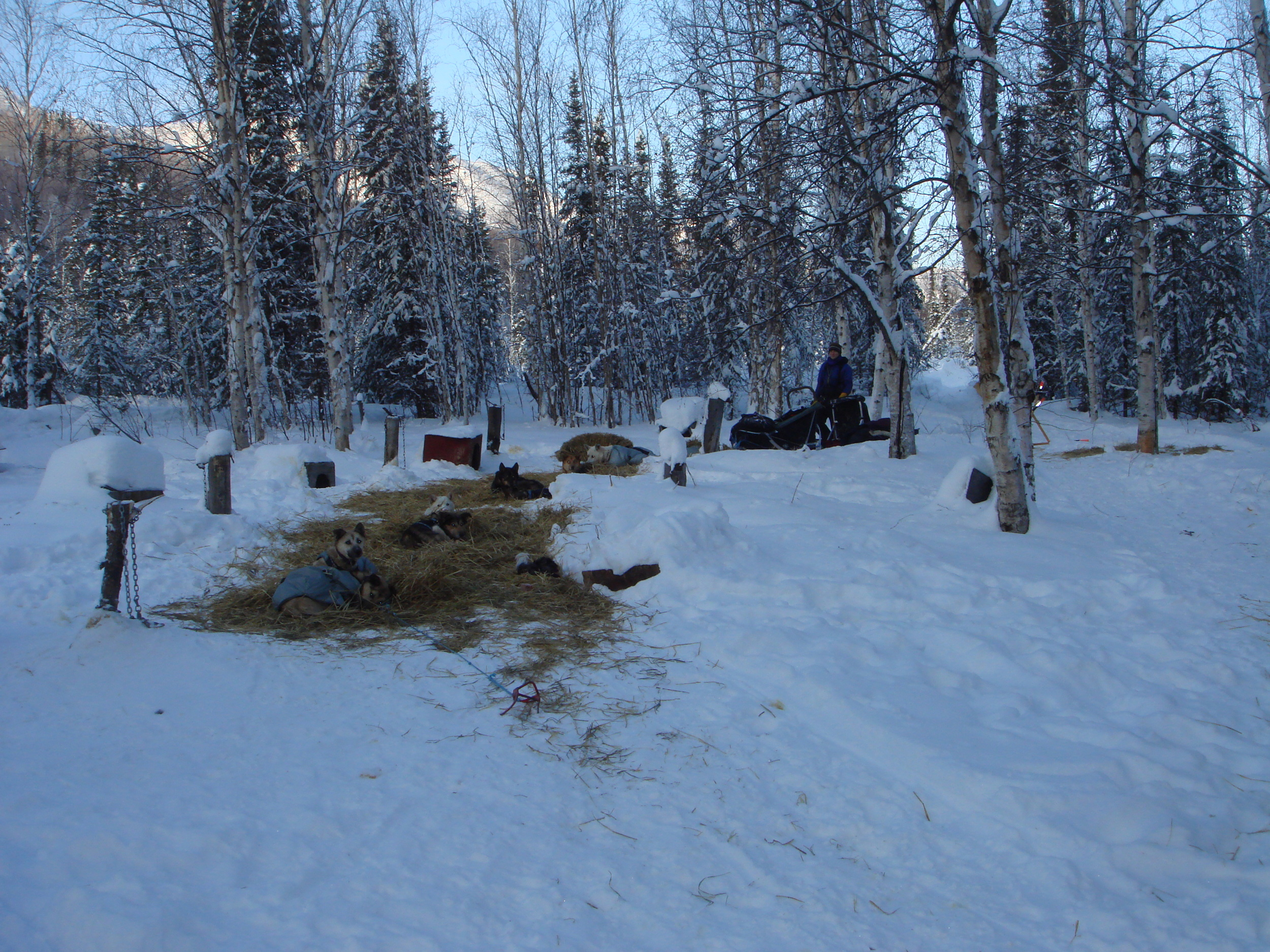 A stop at Trout Creek (Mike Sager's warm cabin opened up for the mushers to enjoy a hot drink!)