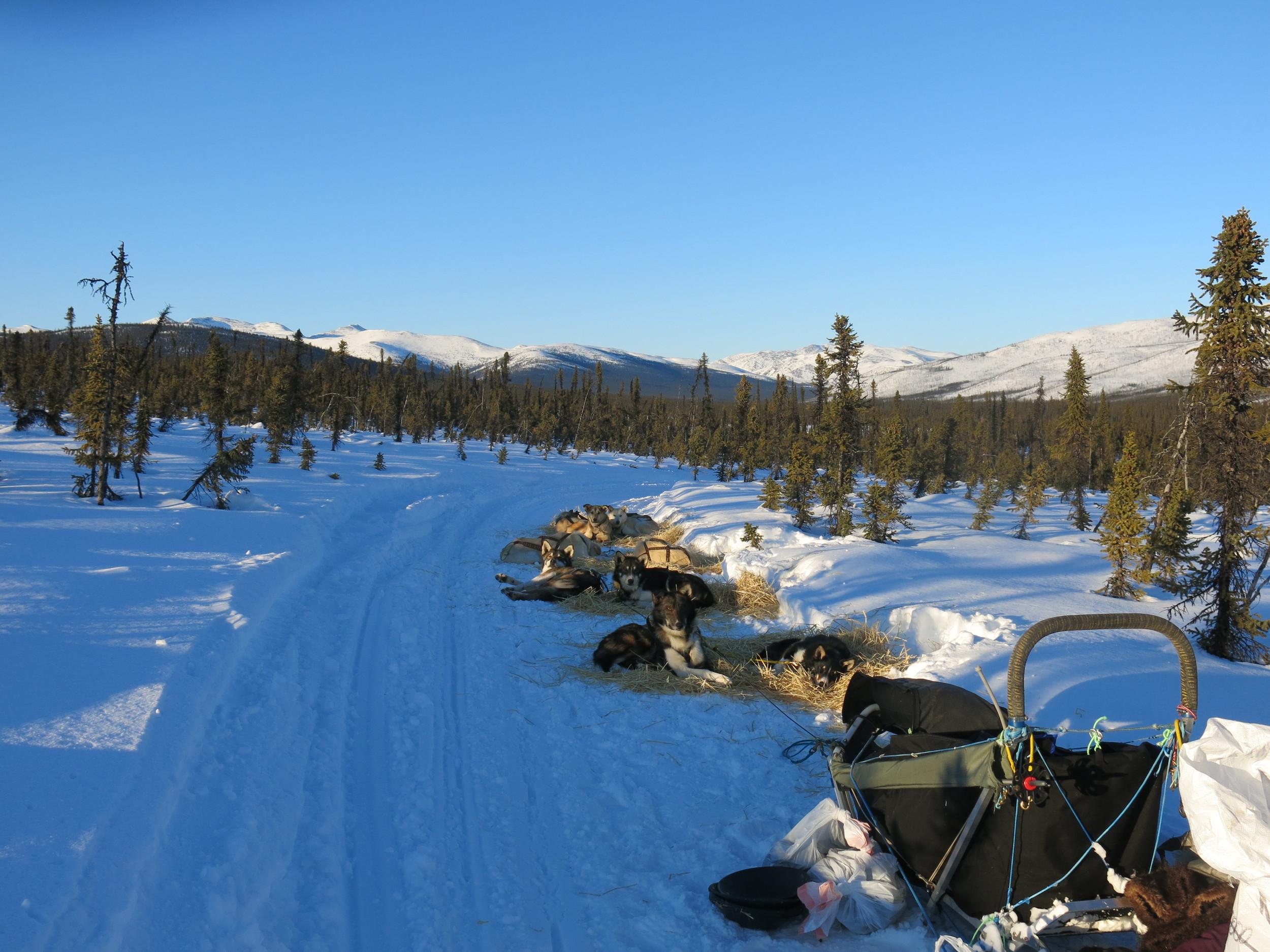 White Mountain camping