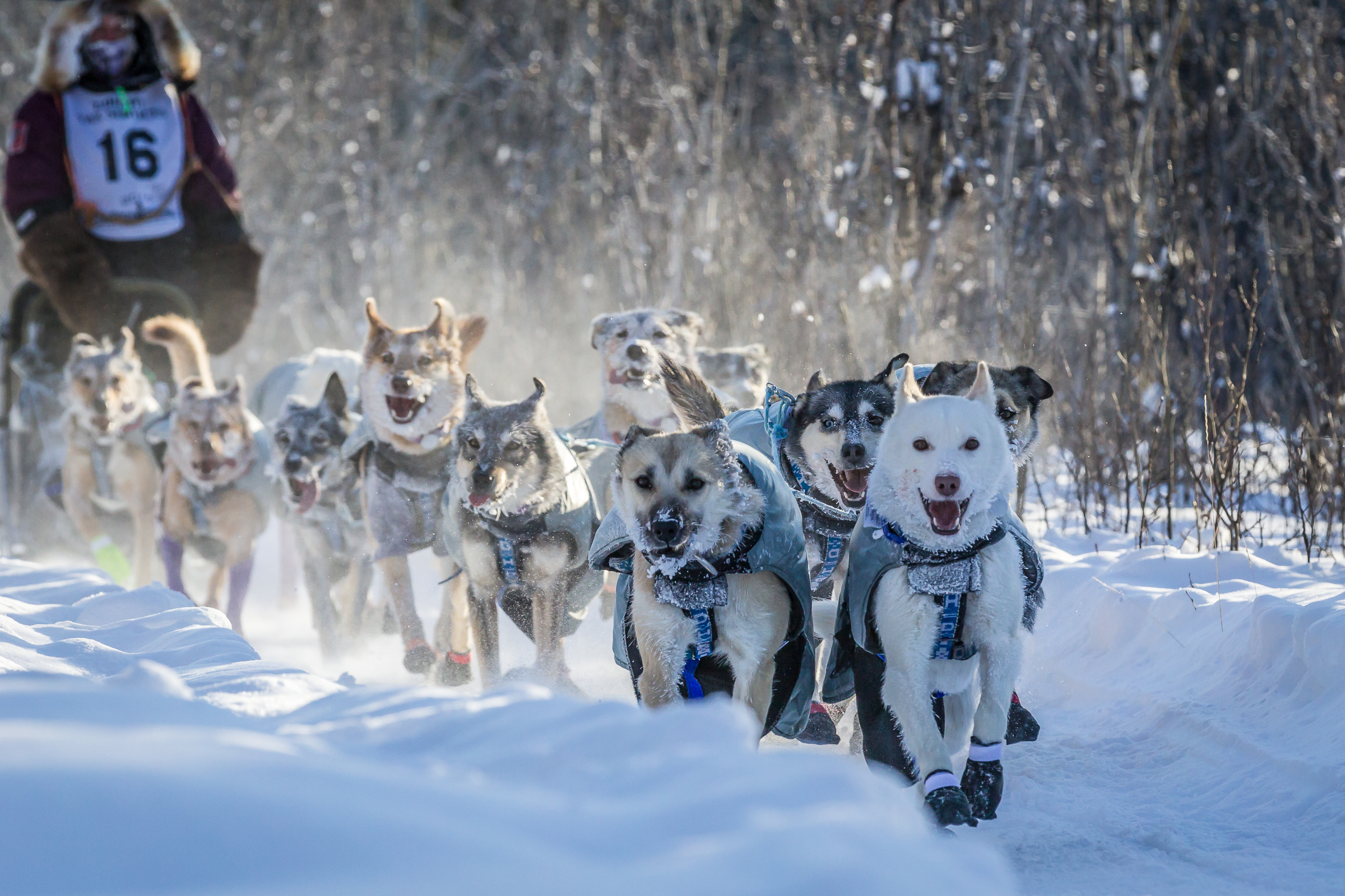 Cartel at start of Yukon Quest- Photo taken by Scott Chesney