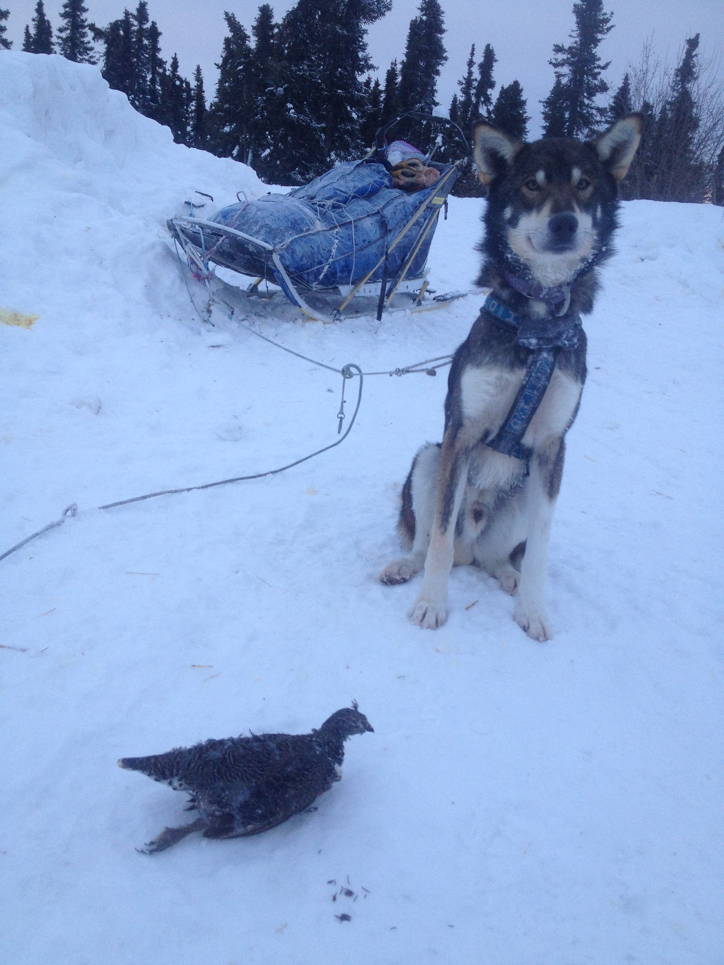 Drake proudly shows off his grouse.