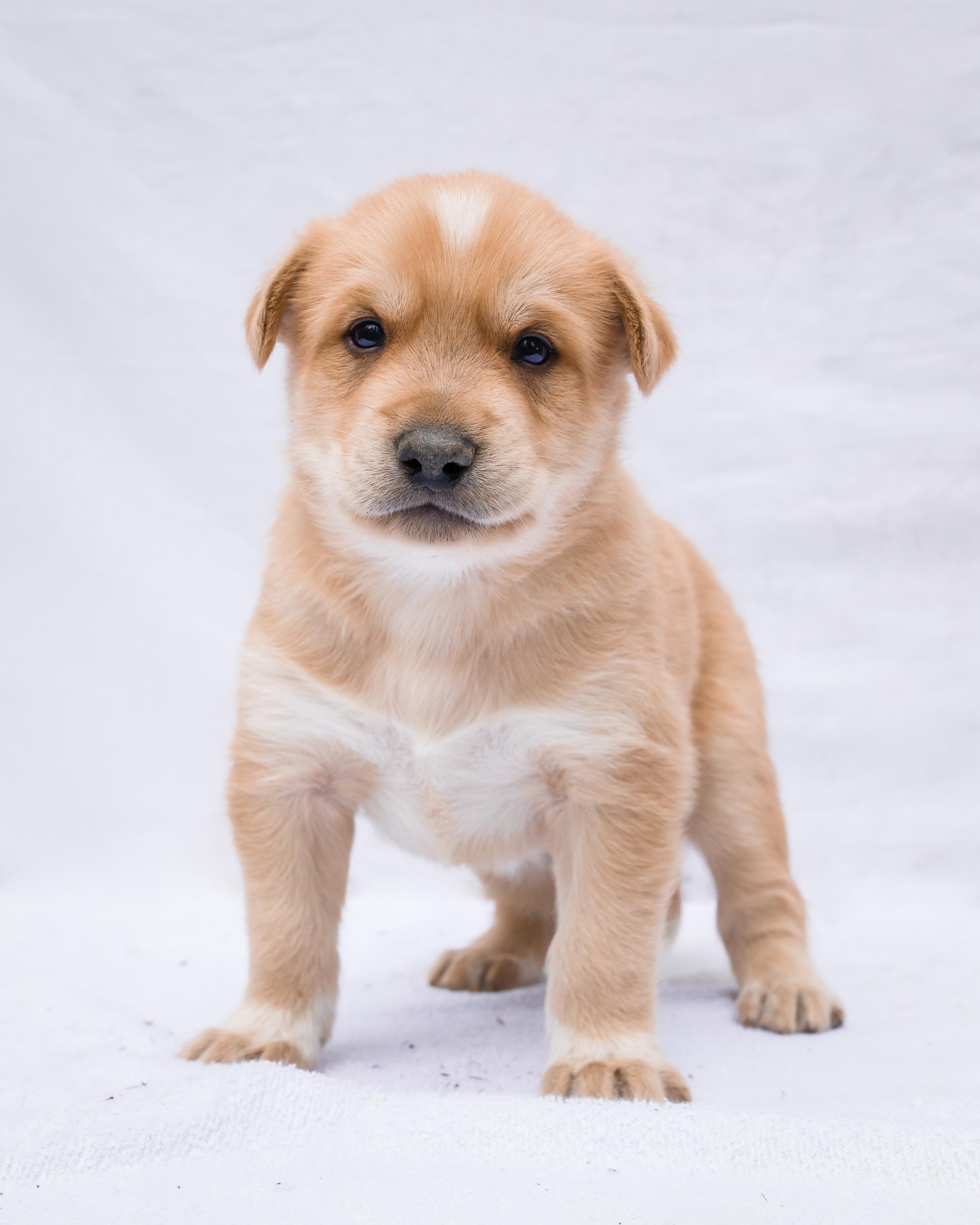 Blitz- Puppy
