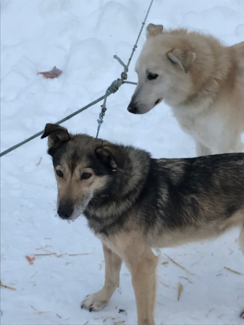 Jana & Lefty patiently wait their turn