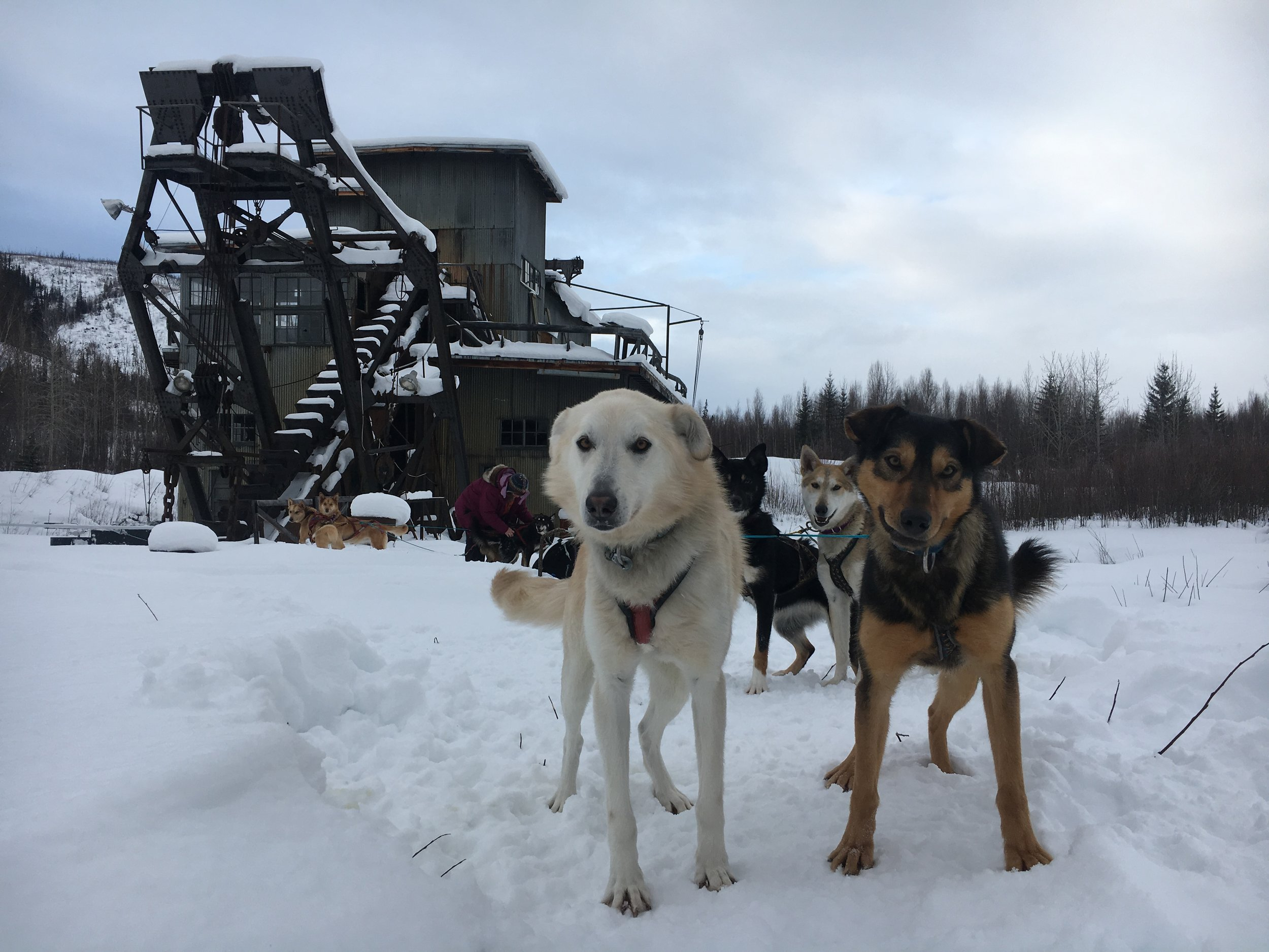 Lefty and Ewok with the Coal Creek Dredge