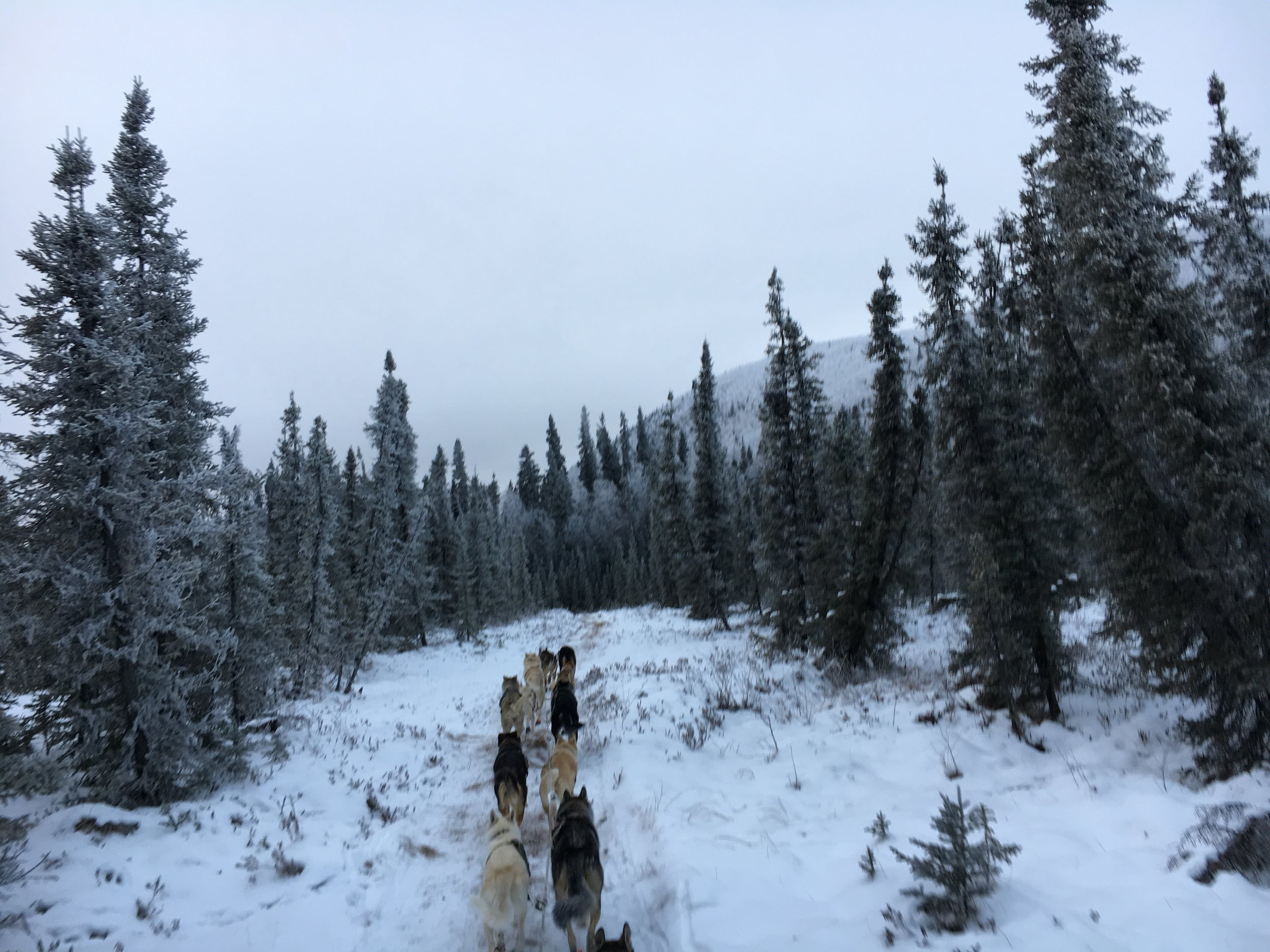 Our Run from yesterday-  Some mushing days, the dogs are the only color we see!