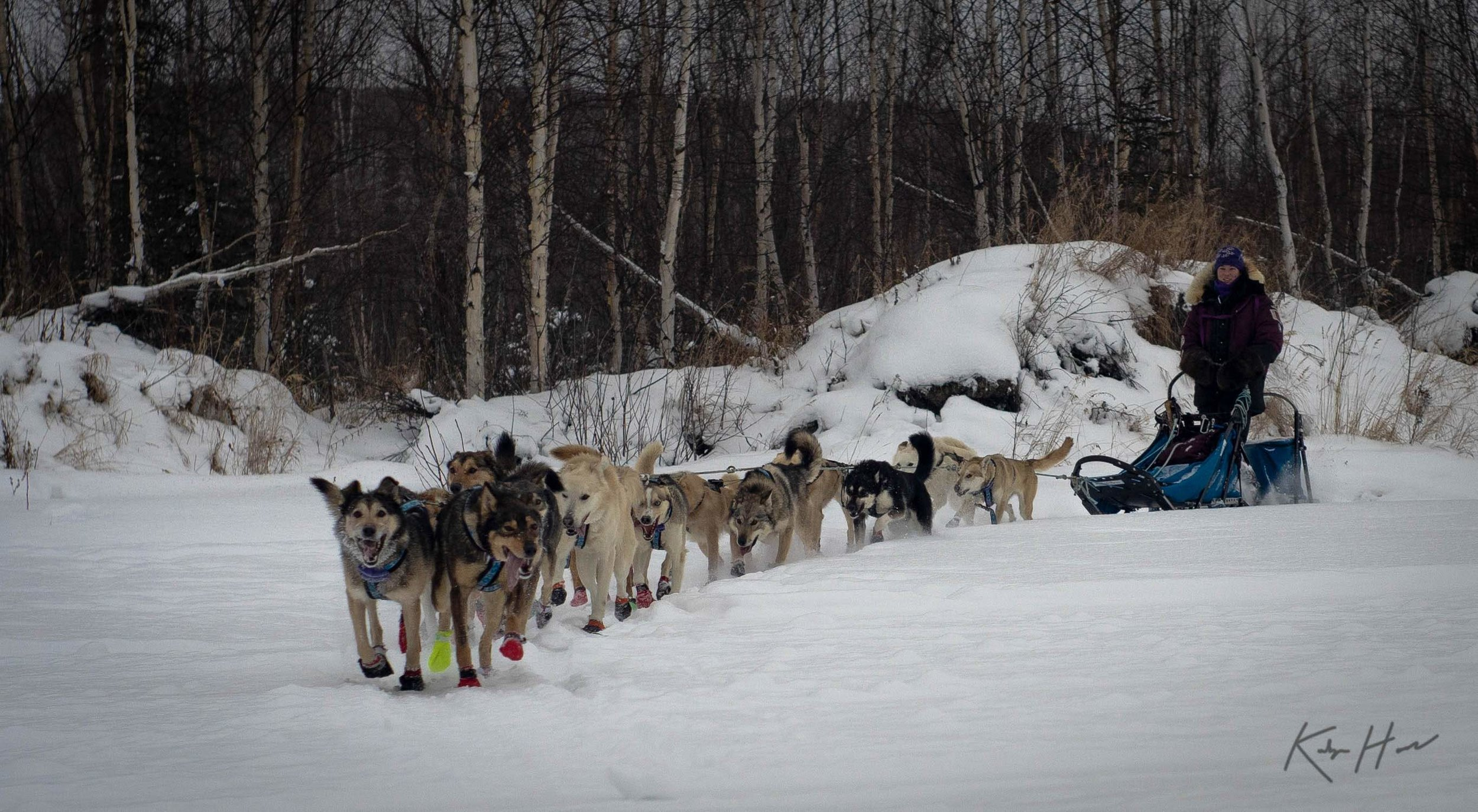One of the final runs before the Yukon Quest