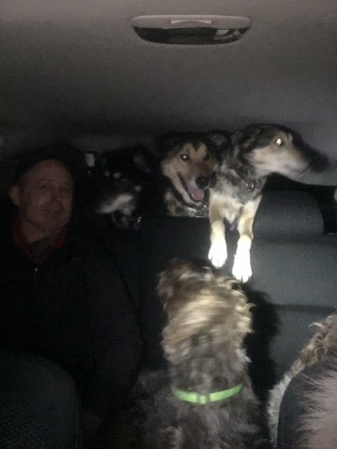 31 derek and pups in car.jpg