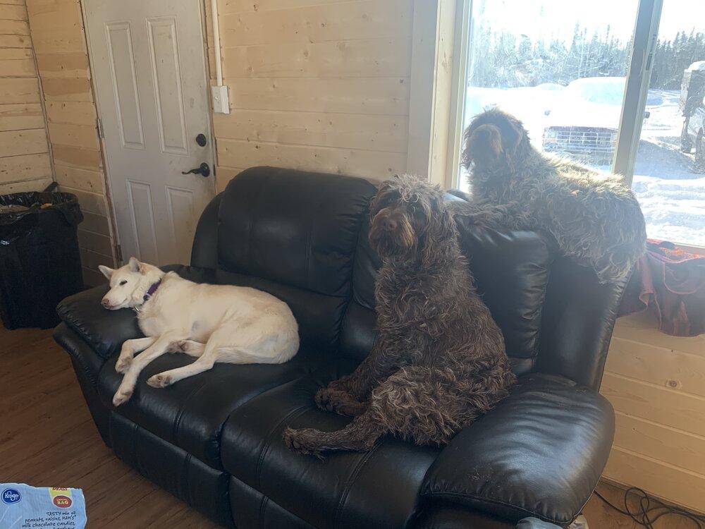 Cartel, Sasha, and Jezzy just chillin.