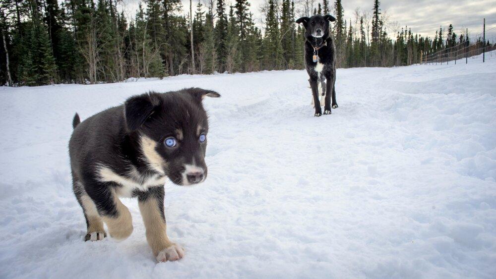 Spitfire and Blue (Kalyn's dog)