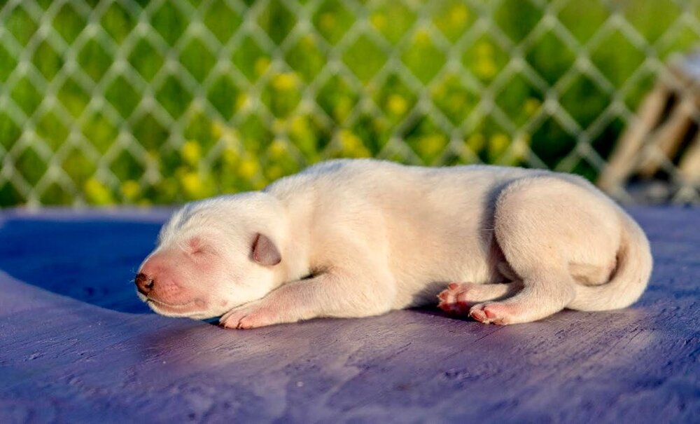 Photo Credit- Kalyn Holl (white male pup)