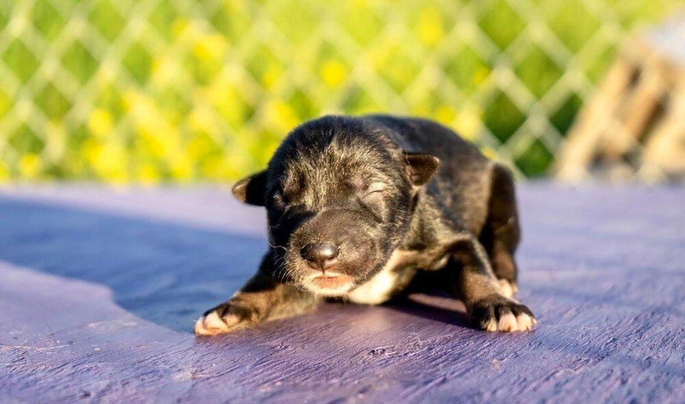 Photo Credit- Kalyn Holl (black male pup)