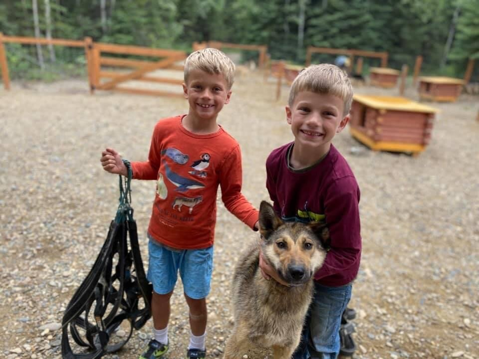 Cheddar being a good sport and teaching the next generation about mushing.
