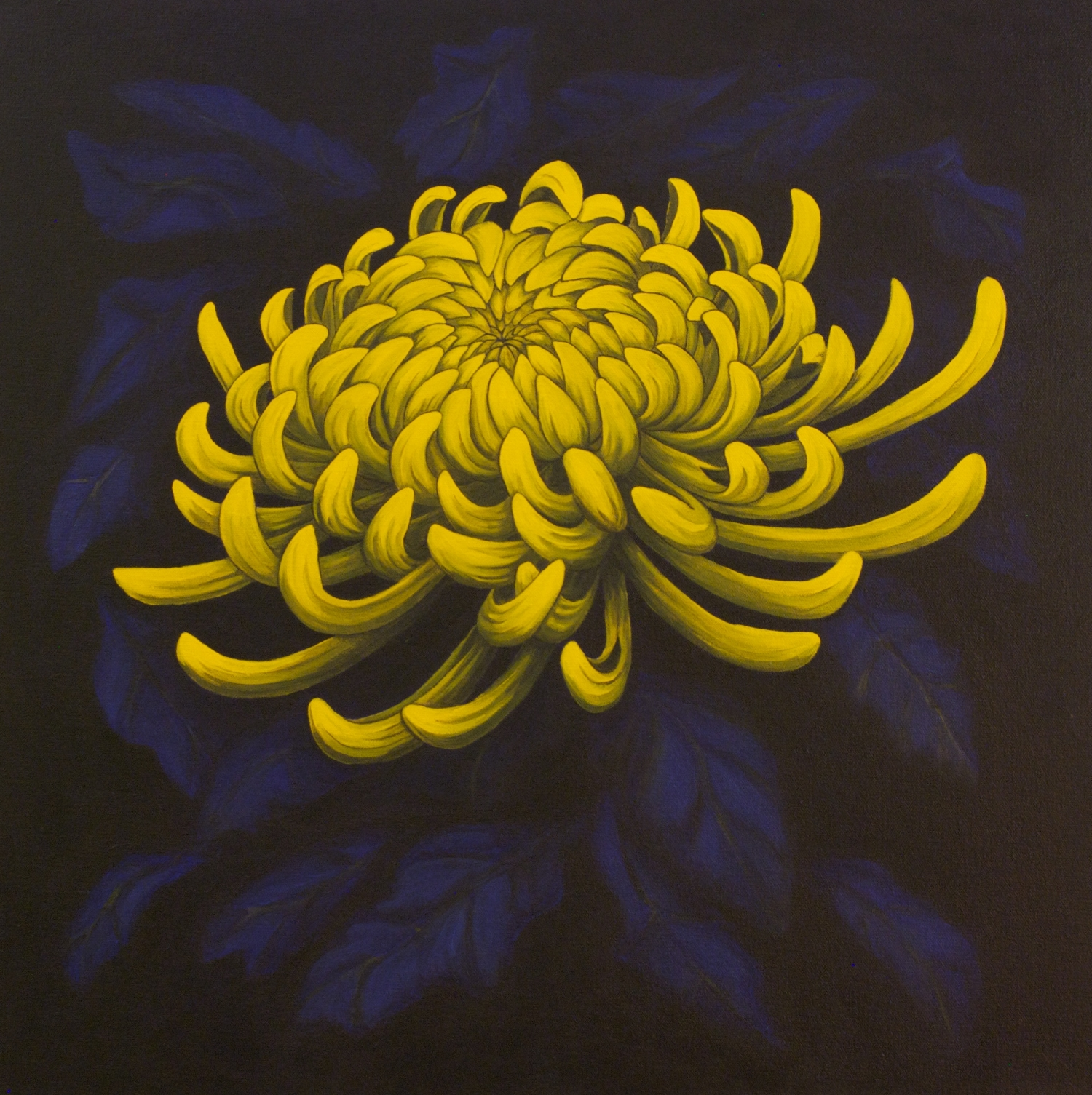 """Achates; Sea Anemone Series   This chrysanthemum series is named for its effect- the luminous flowers seem to echo the sea anemone glowing in the dark waters of the sea. This mum is named after the species Antholoba achates, which is found in the South East Pacific and around the Atlantic coasts of South America. The Antholoba achates is known for its numerous, dense, short tentacles, much like this yellow spider mum's petals.  acrylic painting on 24"""" x 24"""" (x1.5"""") gallery wrapped canvas  $600.00"""