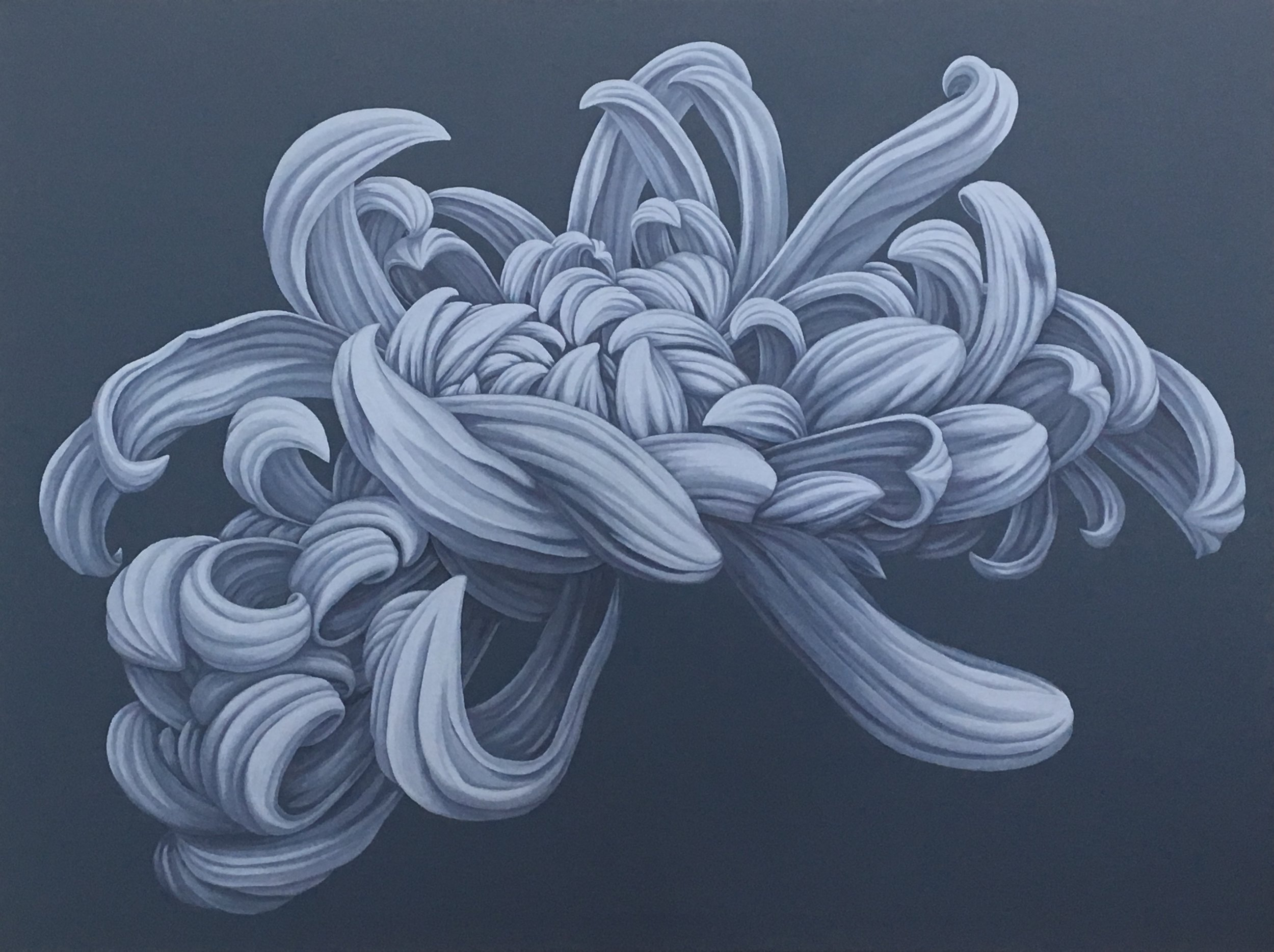 """This unique chrysanthemum portrait focuses on the beauty of the irregular form. The graceful and unique structure of this chrysanthemum refuses to comply with the standard definition of beauty.  30"""" x 40"""" gallery wrapped canvas  $3300.00"""