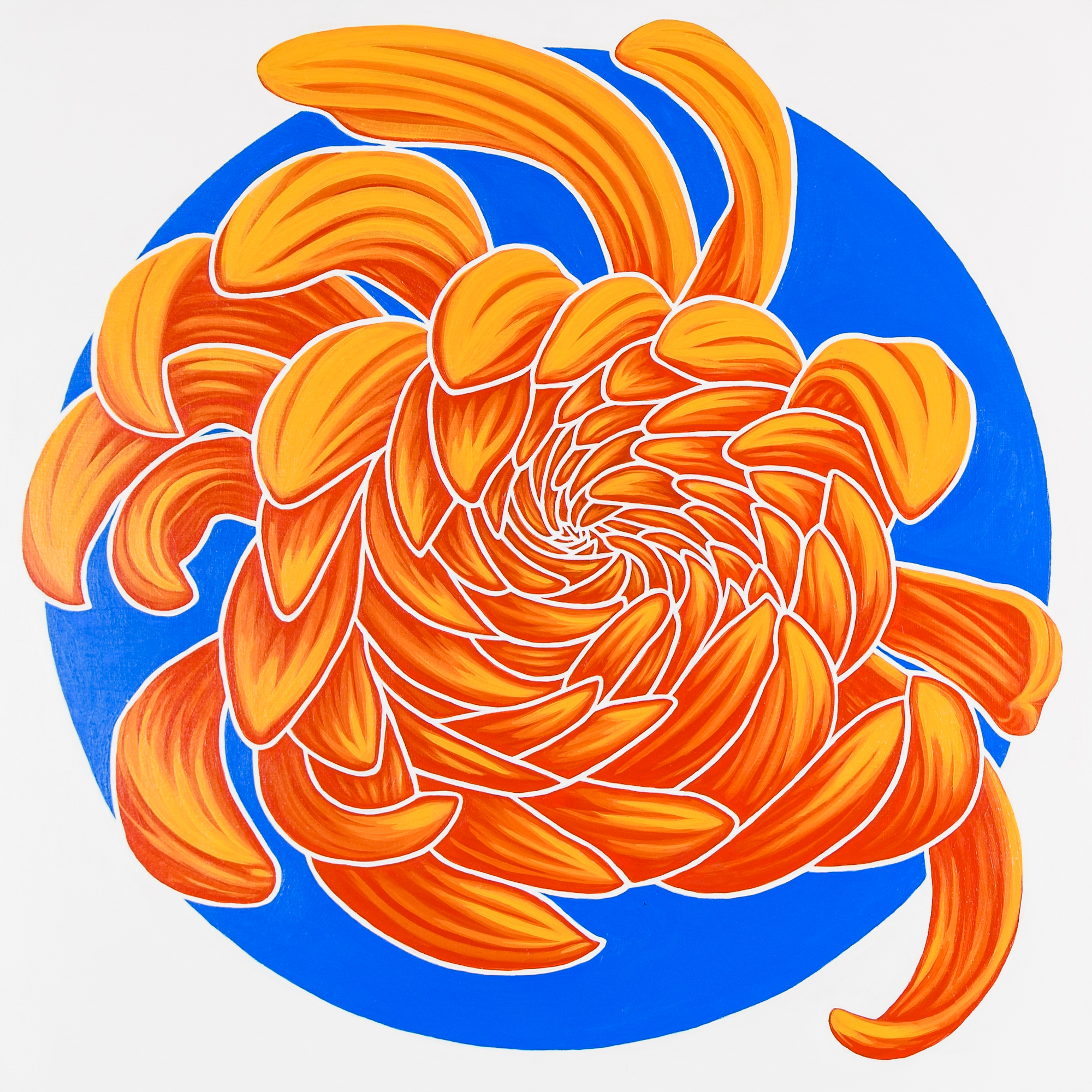 """California Dream II   Reminiscent of sunshine, surfboards and muscle cars this chrysanthemum shines.  acrylic painting on 20""""x20""""(x 1 5/8"""") gallery wrapped canvas  $1100.00"""