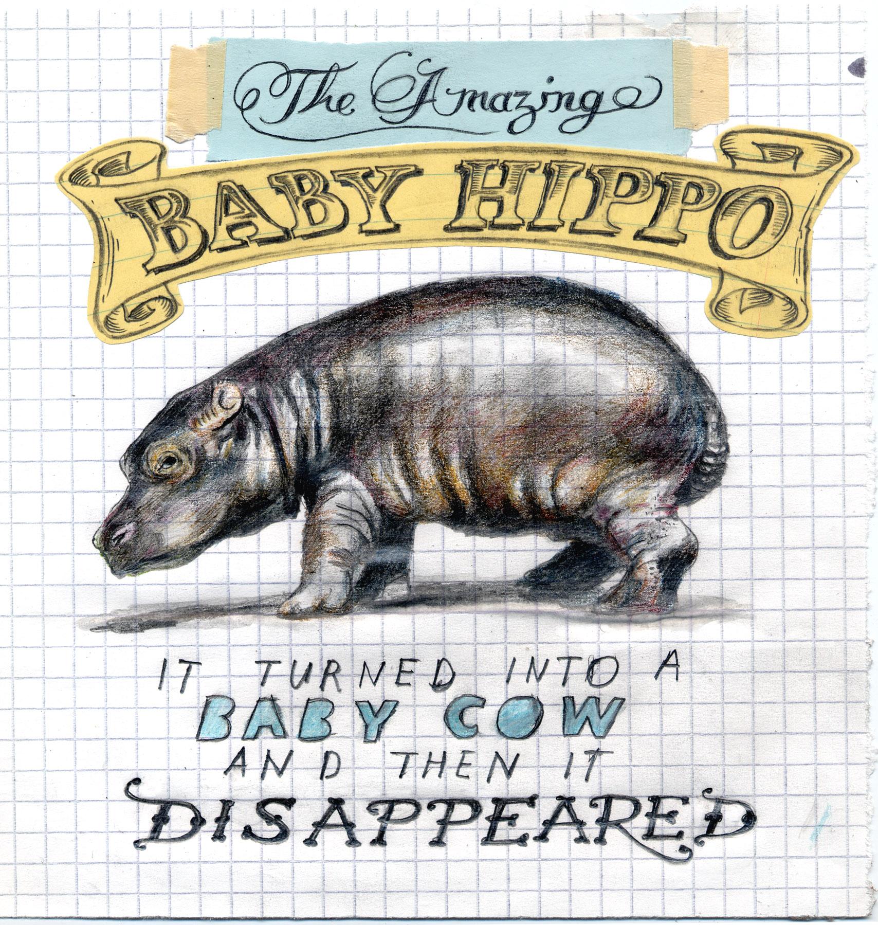 Baby_hippo_final.jpg