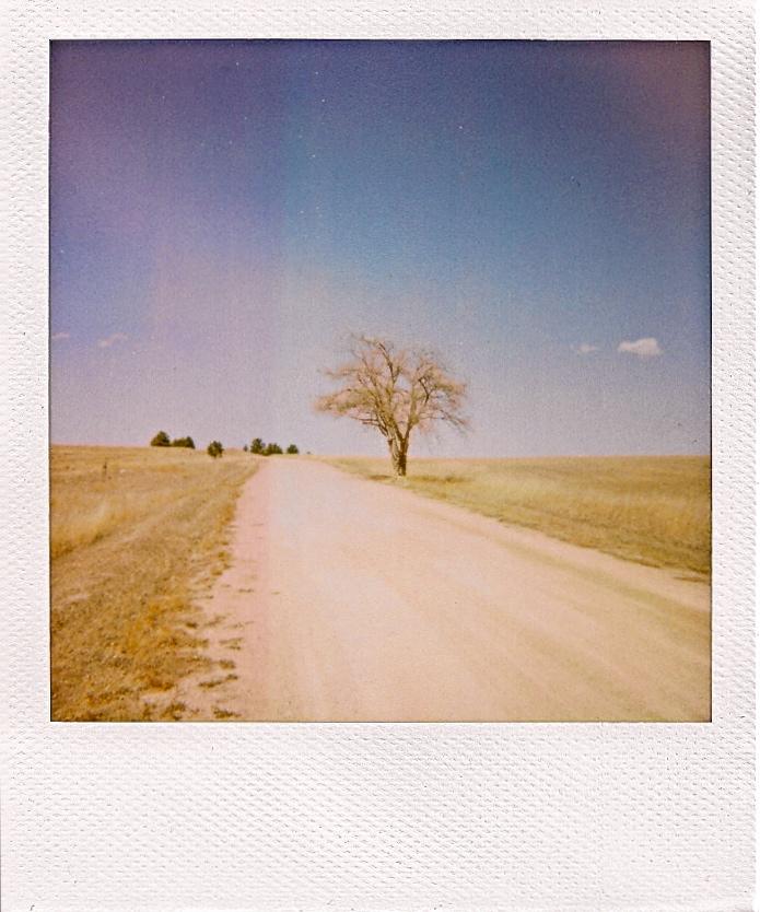 tree, far pola.jpg