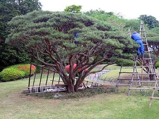 Aesthetic pruning
