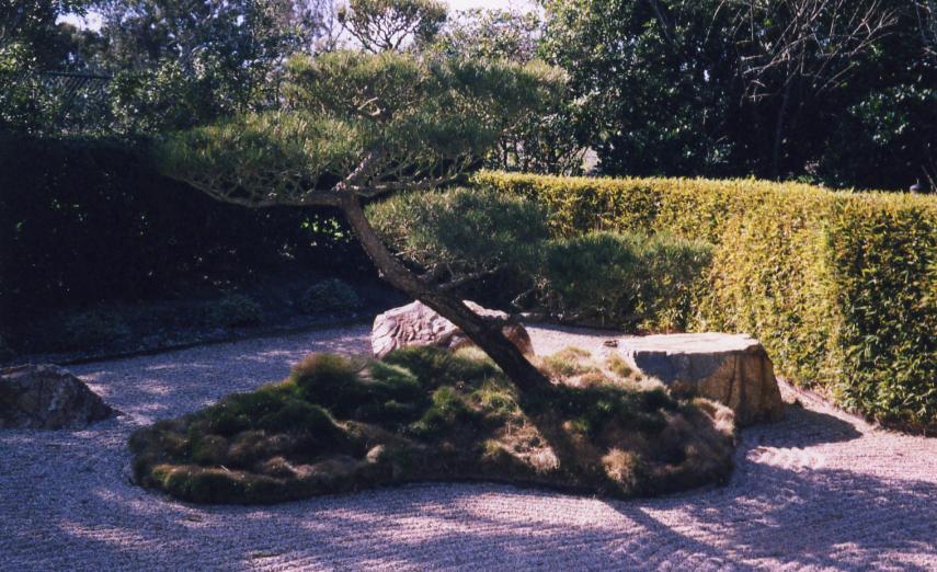 pruning-8339758_orig.jpg