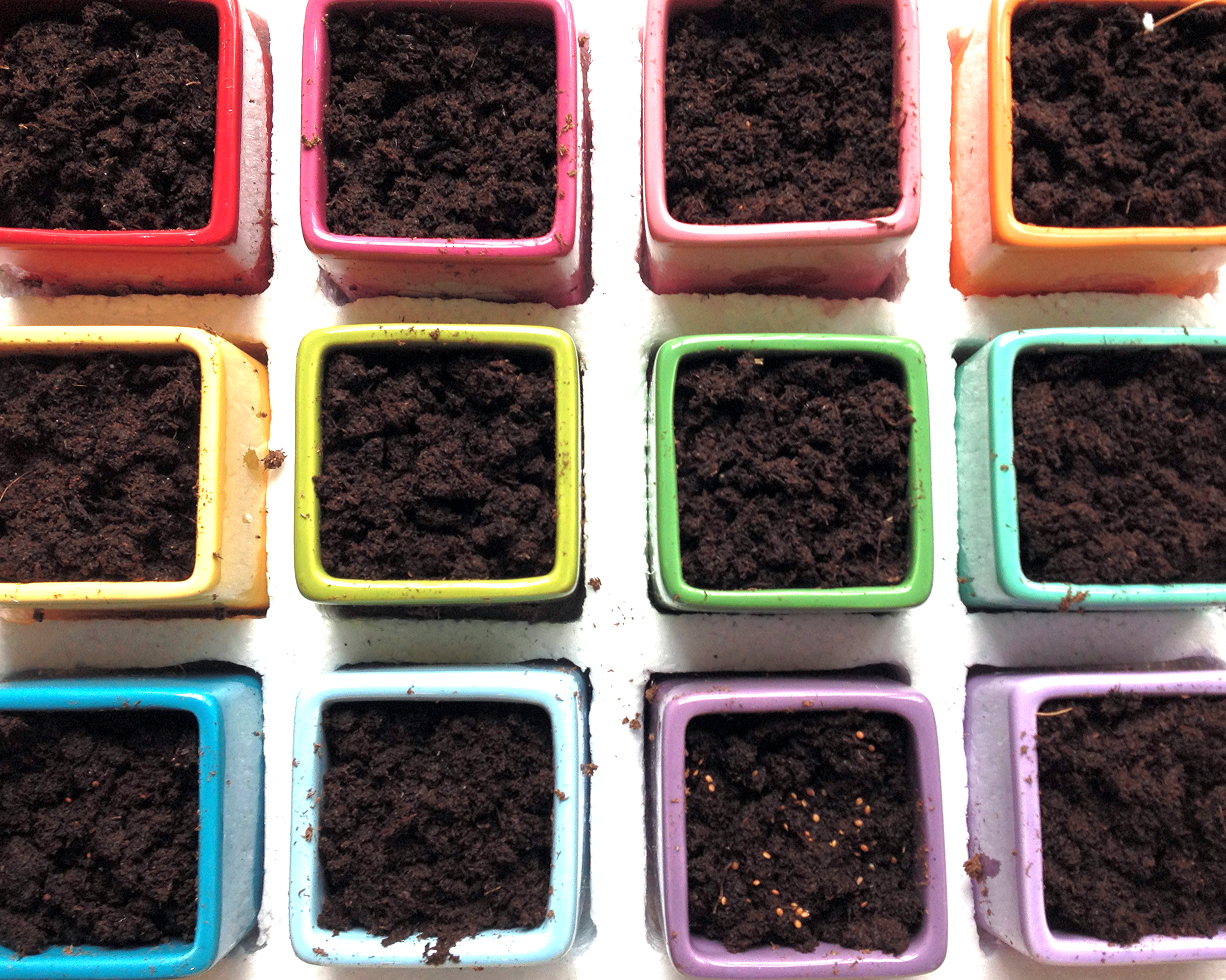 The seeds are all planted, watered, and set by the window in a spot of sun .