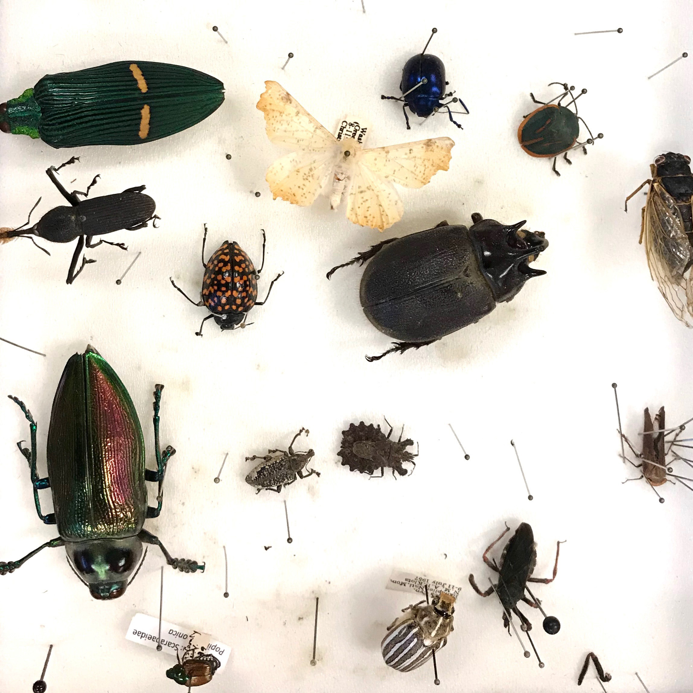 Insect specimens from my entomology class at the NYBG.