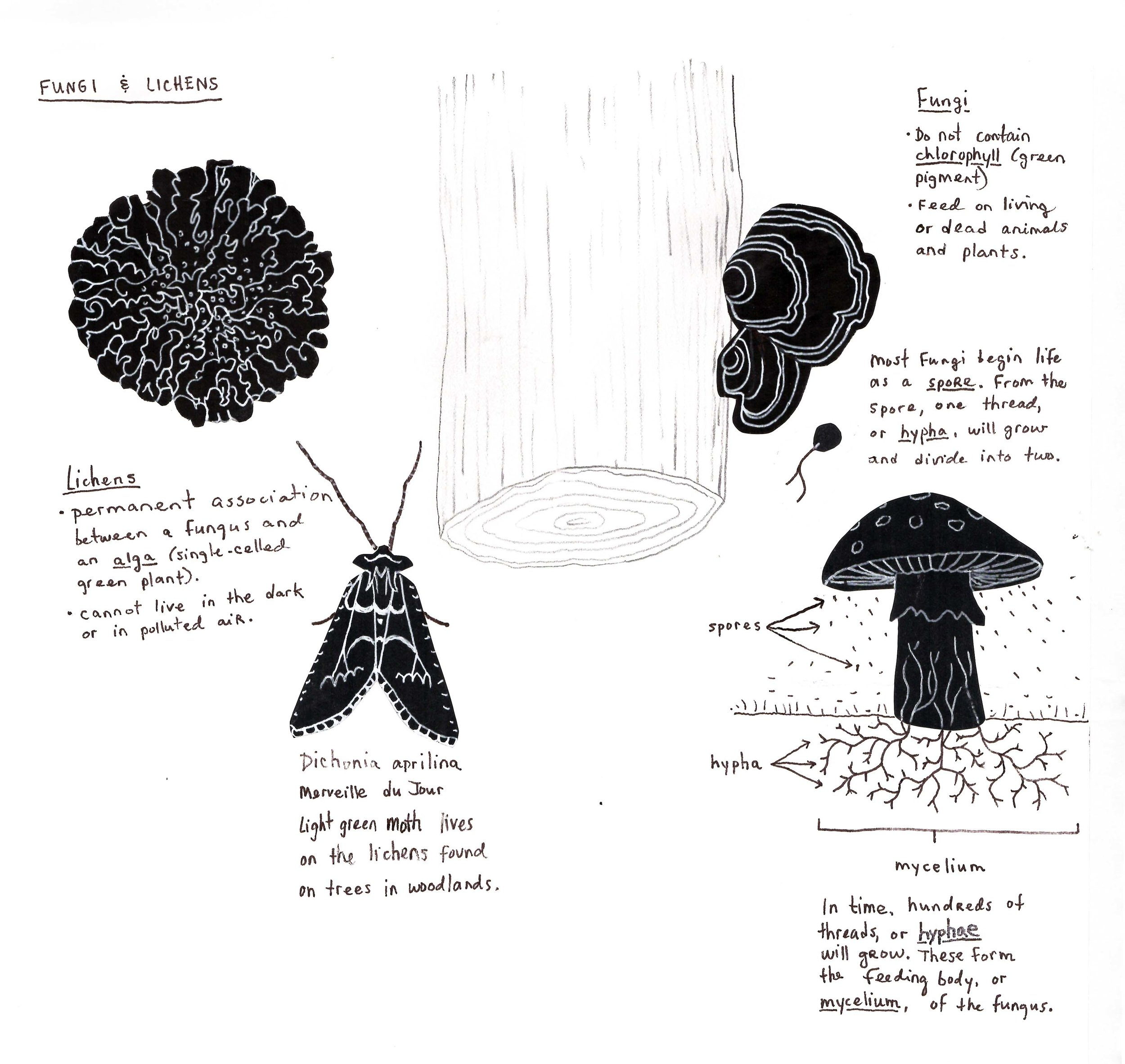 Notes on lichens and fungi.