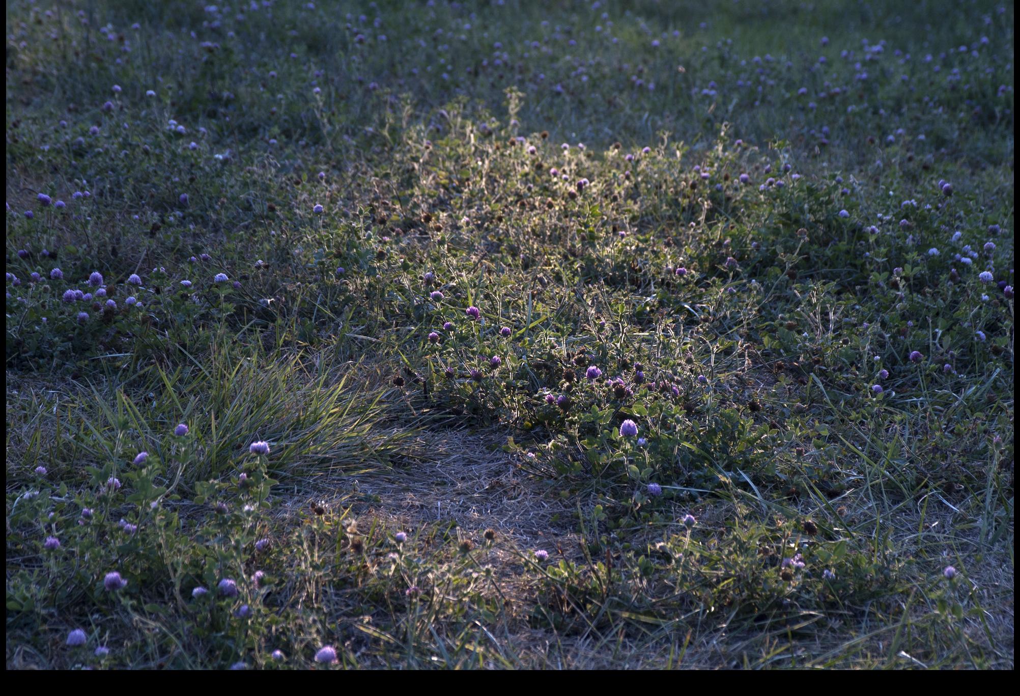 """"""" Grass beneath prayer tent ,"""" 2012."""