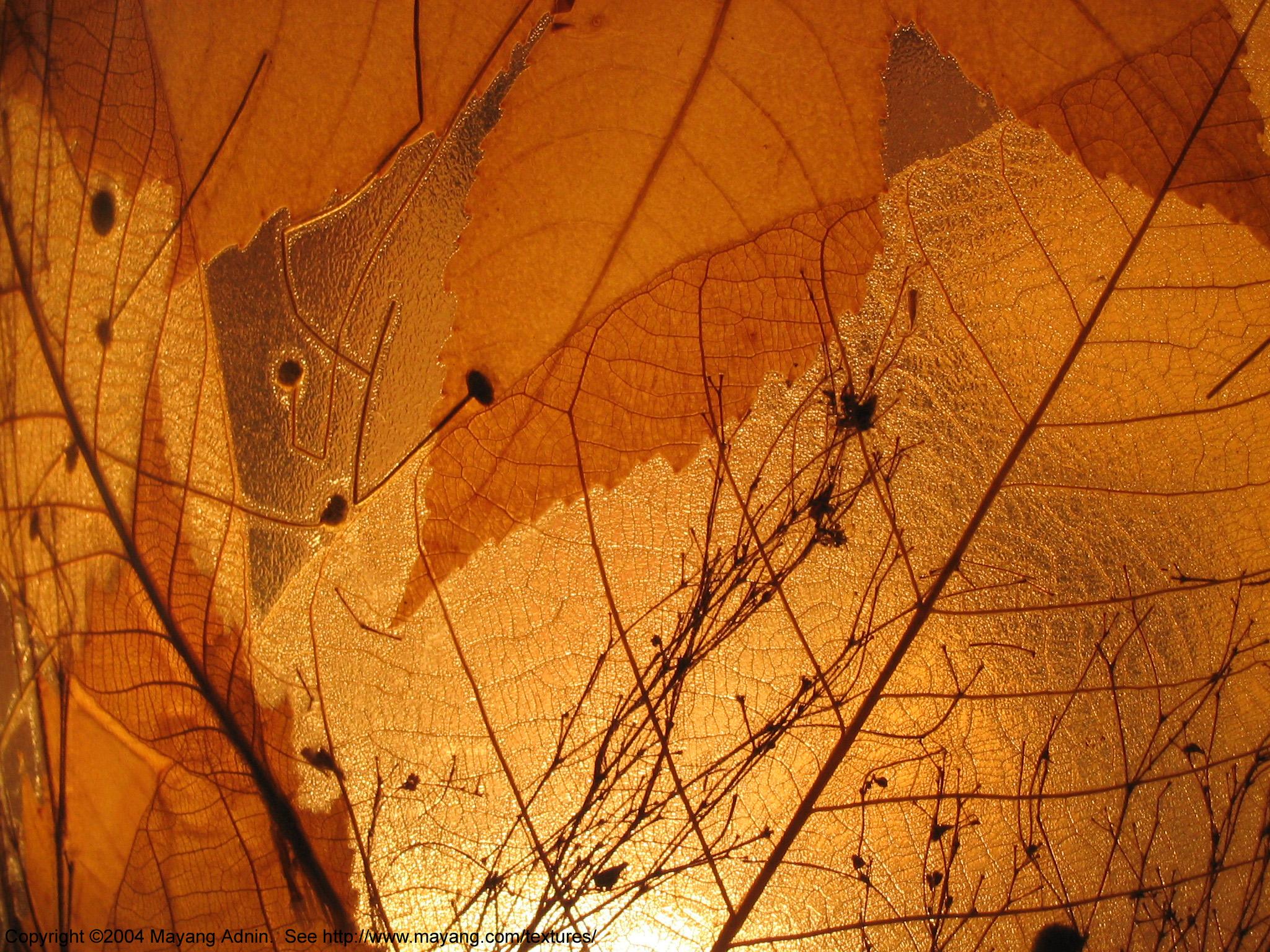 leaf_light_shining_through_0675.JPG