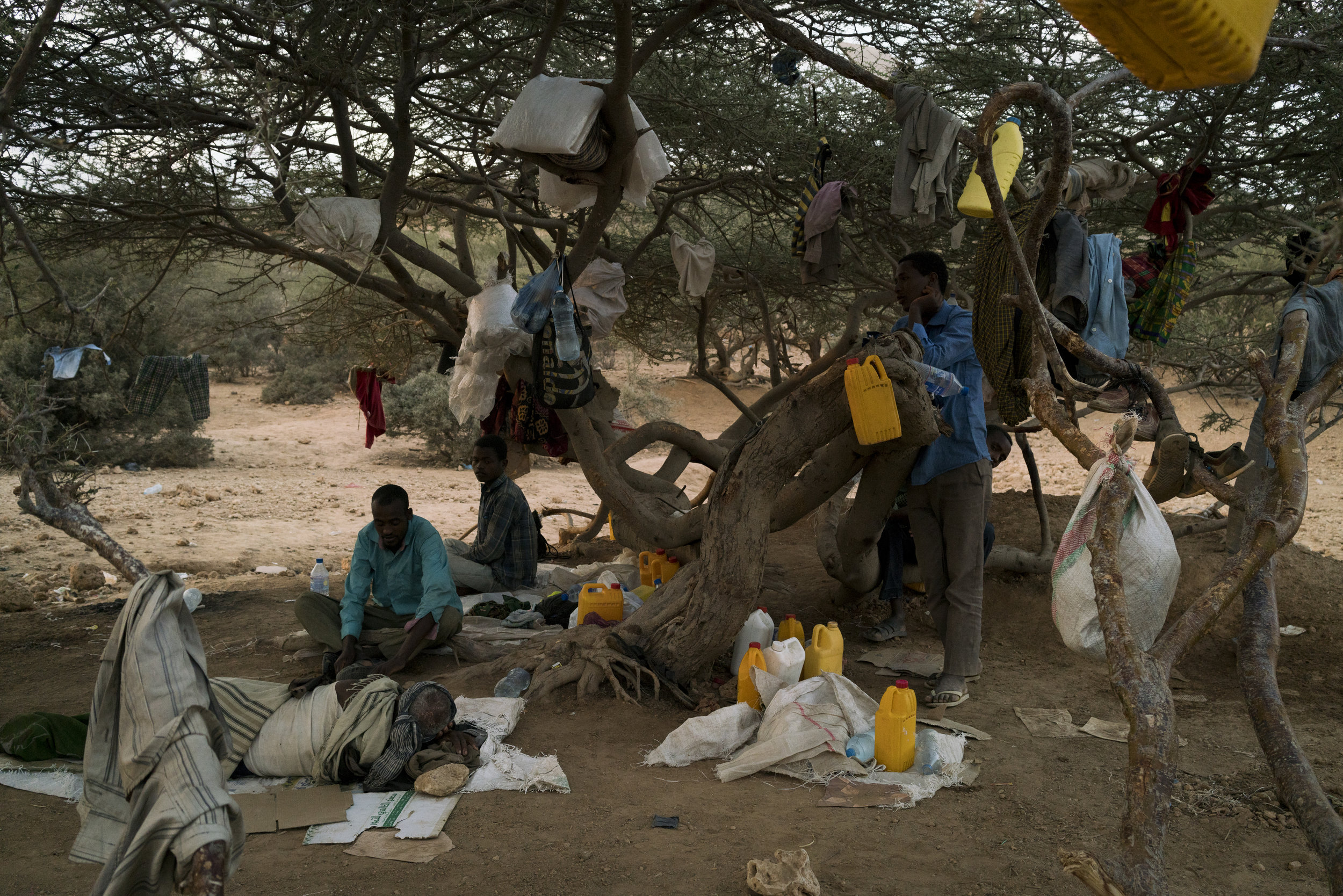 Waiting to be smuggled by boat to Yemen and eventually find their way to Saudi Arabia in search of work, Ethiopian migrants live under a tree outside the town of Obock, Djibouti, January 12, 2016.