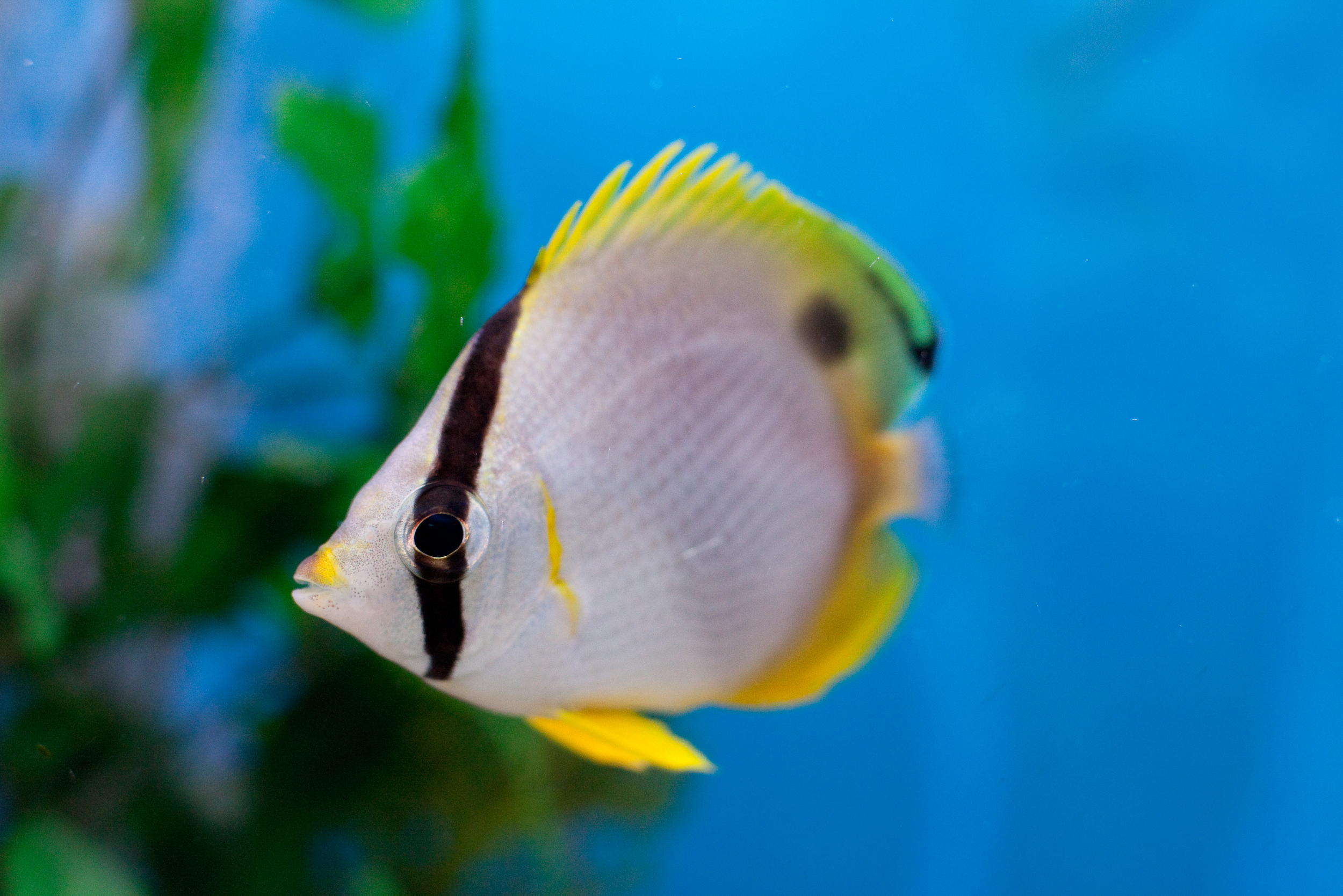 Fish28.jpg