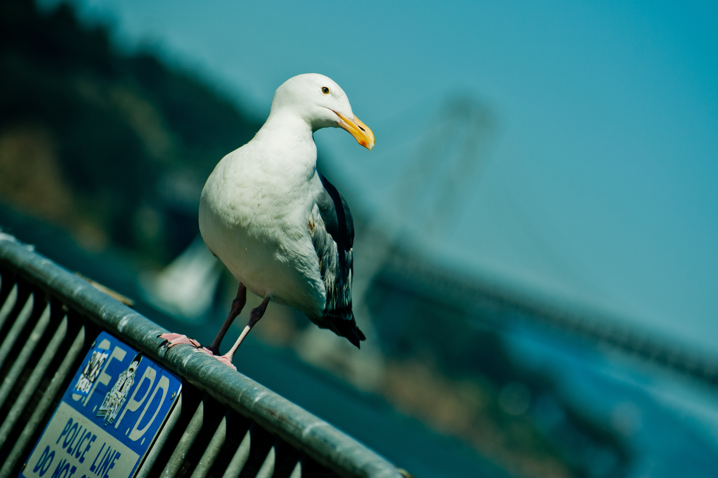 3842 - Gull.jpg