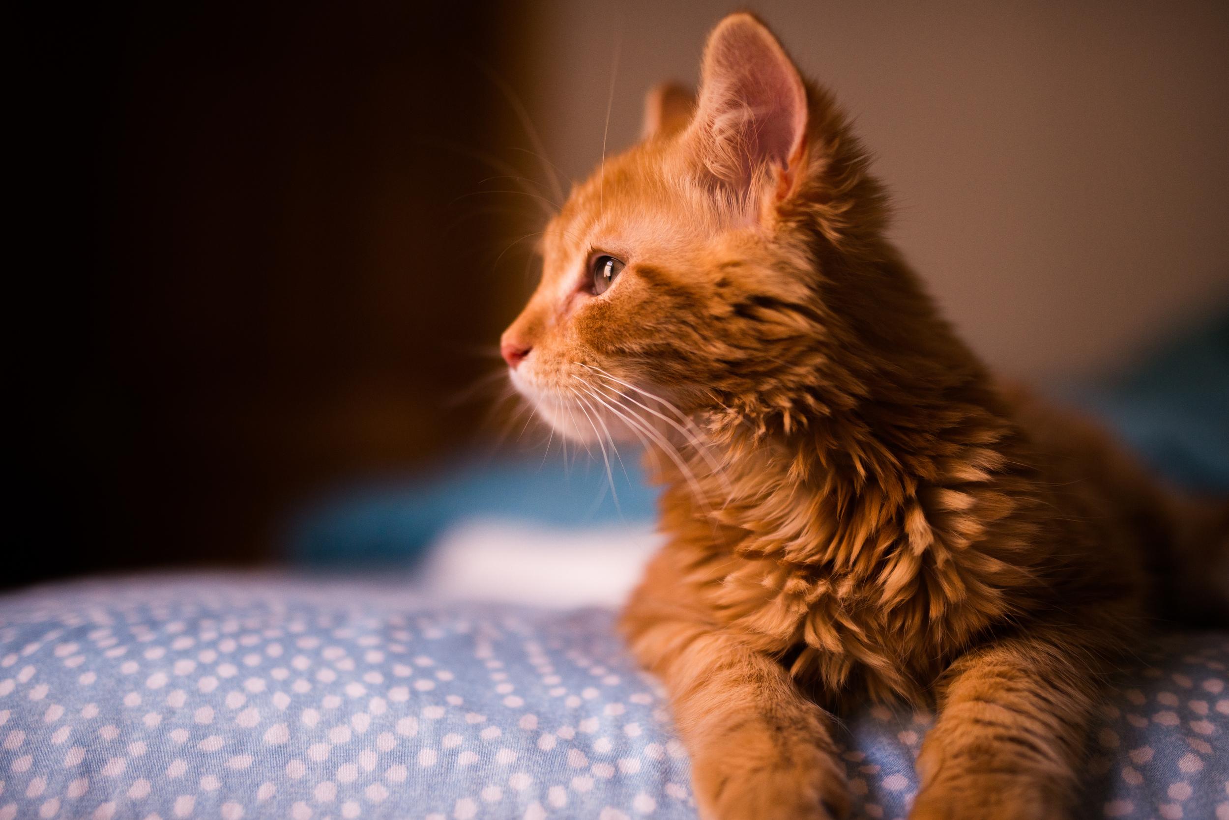 Cats-0961.jpg