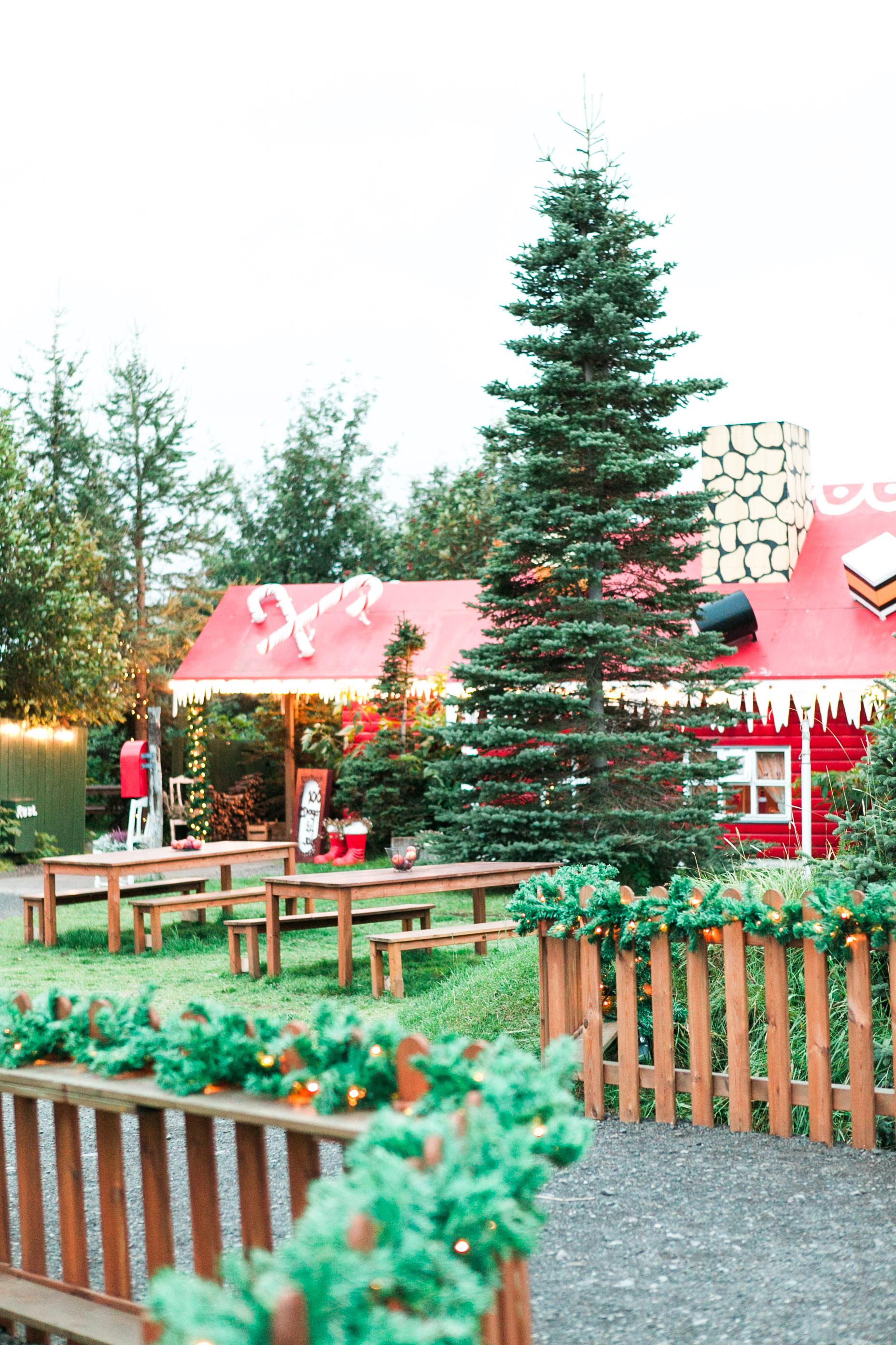 Christmas Garden