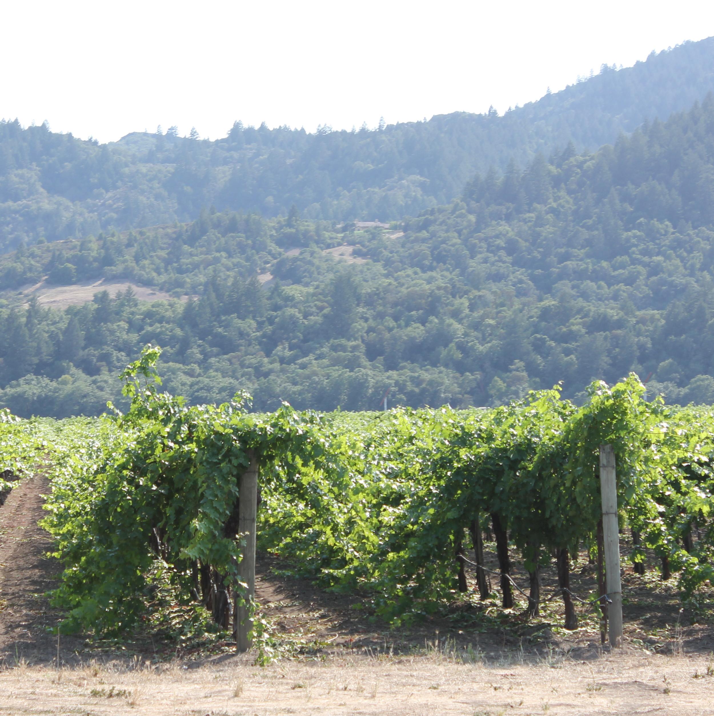 Happy vines along 29 highway
