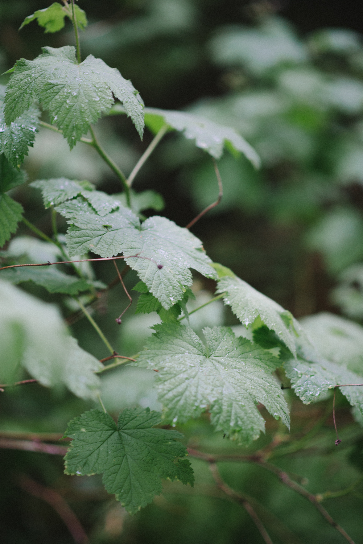 Hoyt-Arboretum-Washington-Park-portland-oregon-natural-woodland fern-16