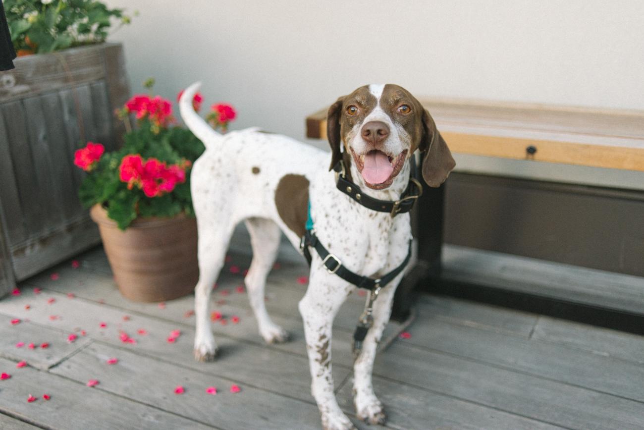 ecotrust-building-wedding-reception-puppy-pet-portland-oregon-shelley-marie-photo