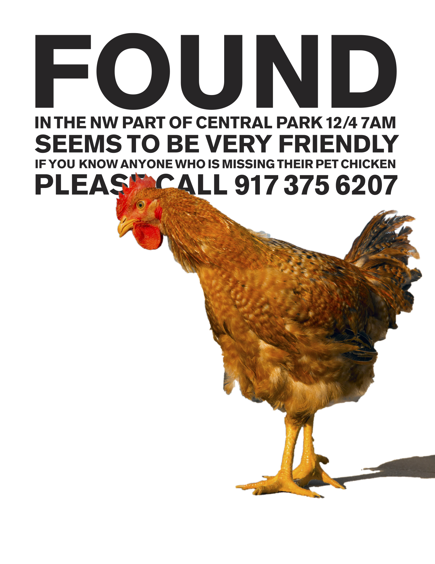 FOUND CHICKEN_high rez-1.png