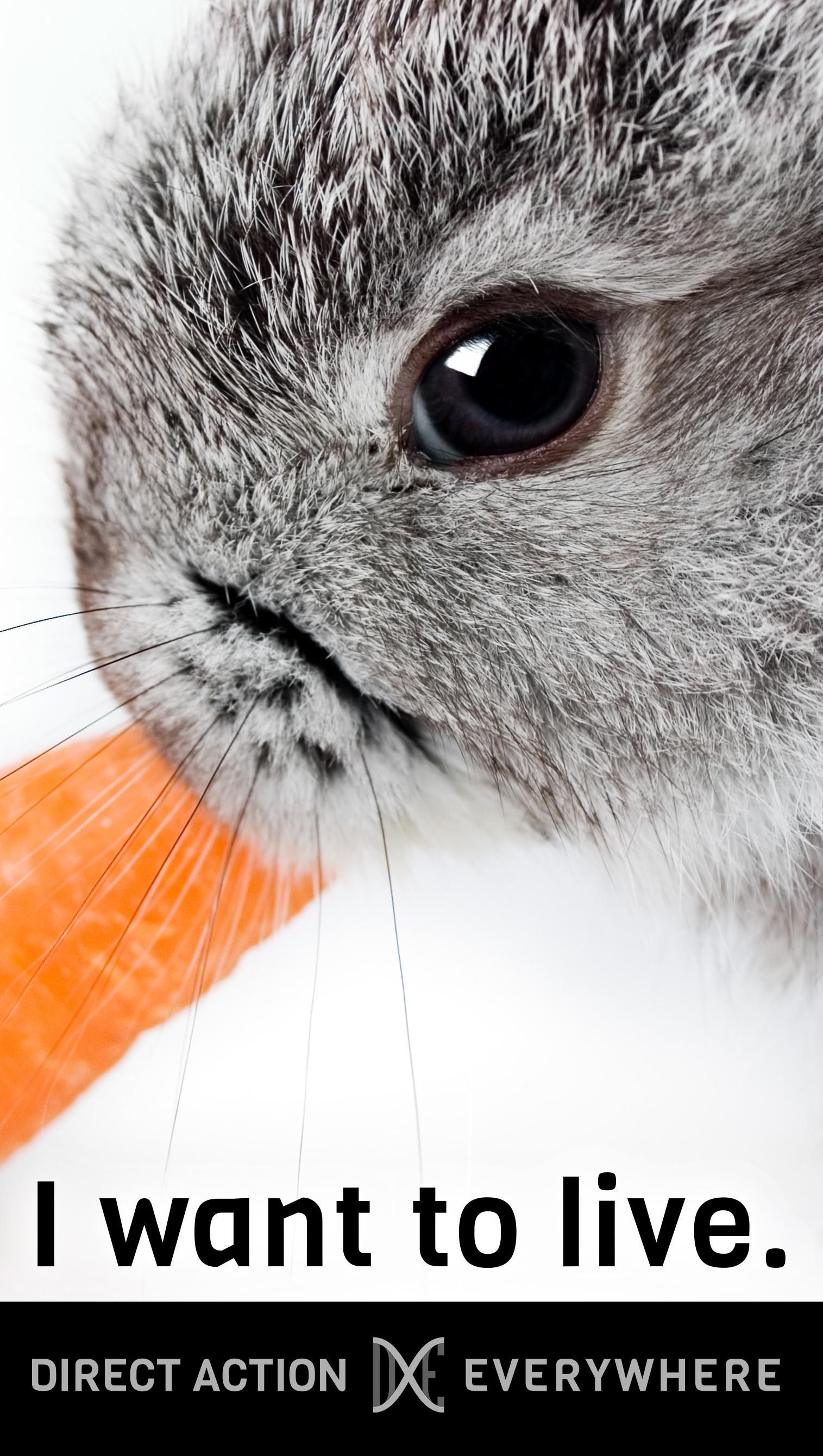 iwanttolive_rabbit.jpg