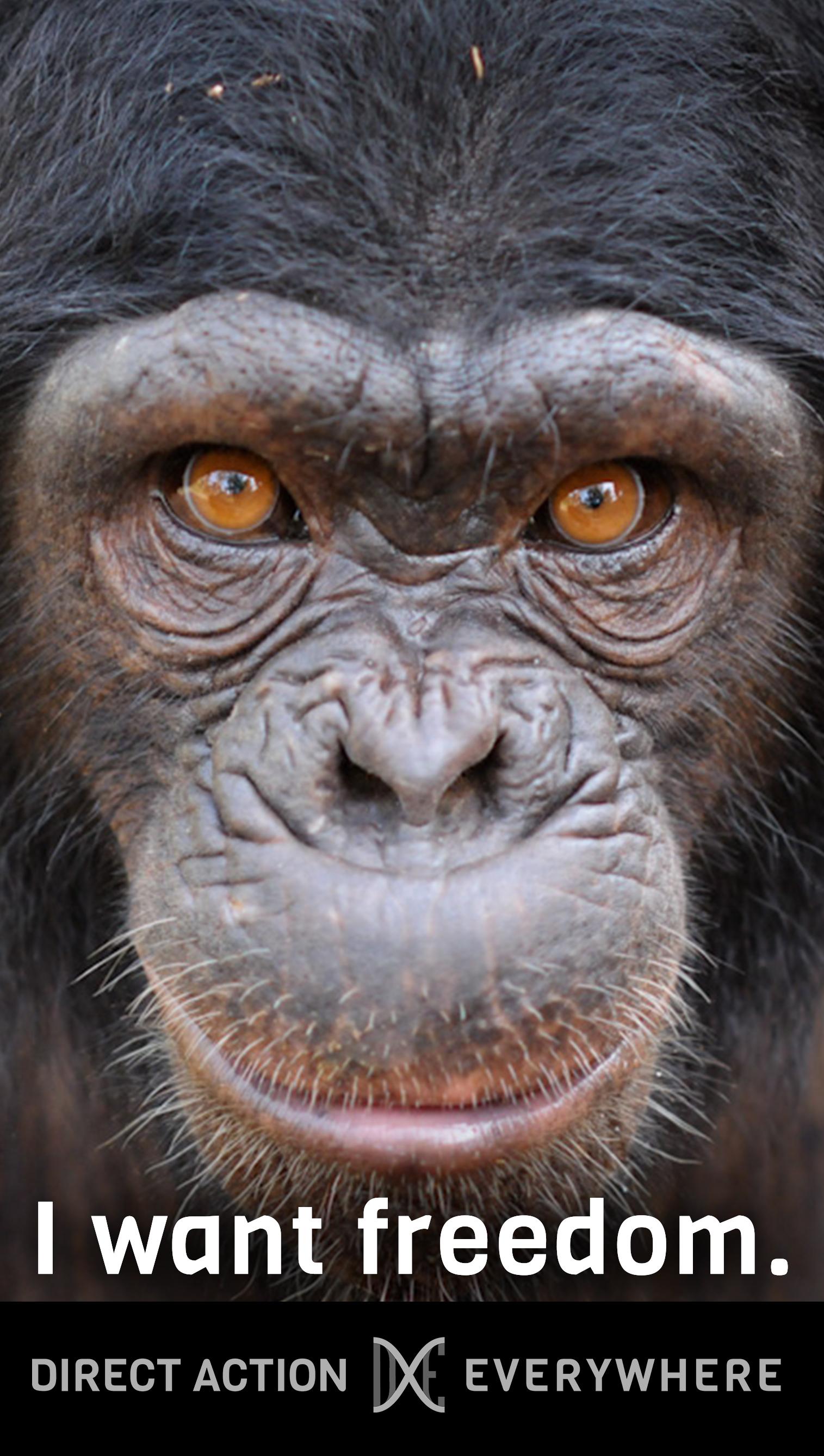 iwantfreedom_chimp.jpg